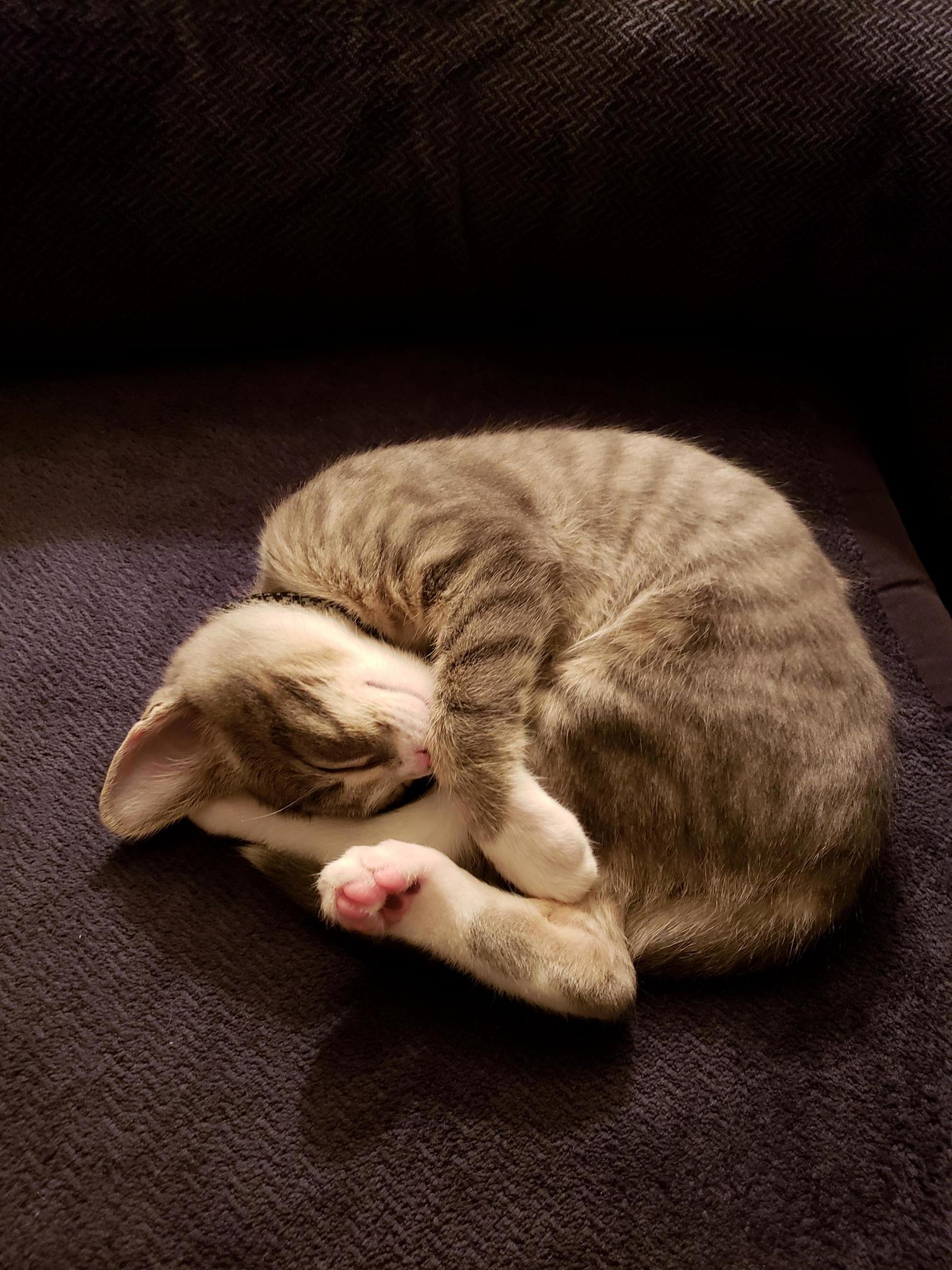 One of his favorite sleeping poses 
