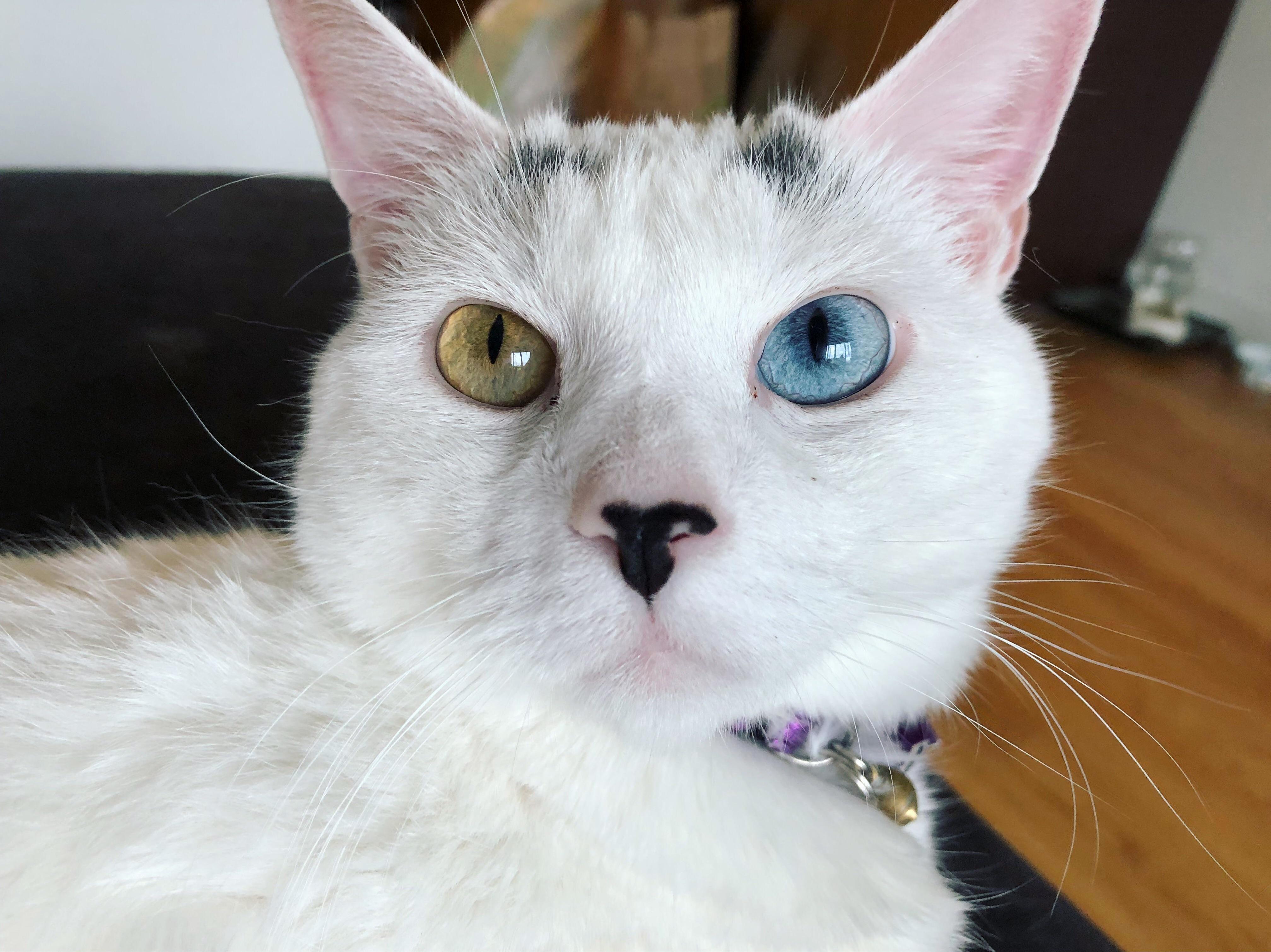 Sweetest, pink eared angel sybil.
