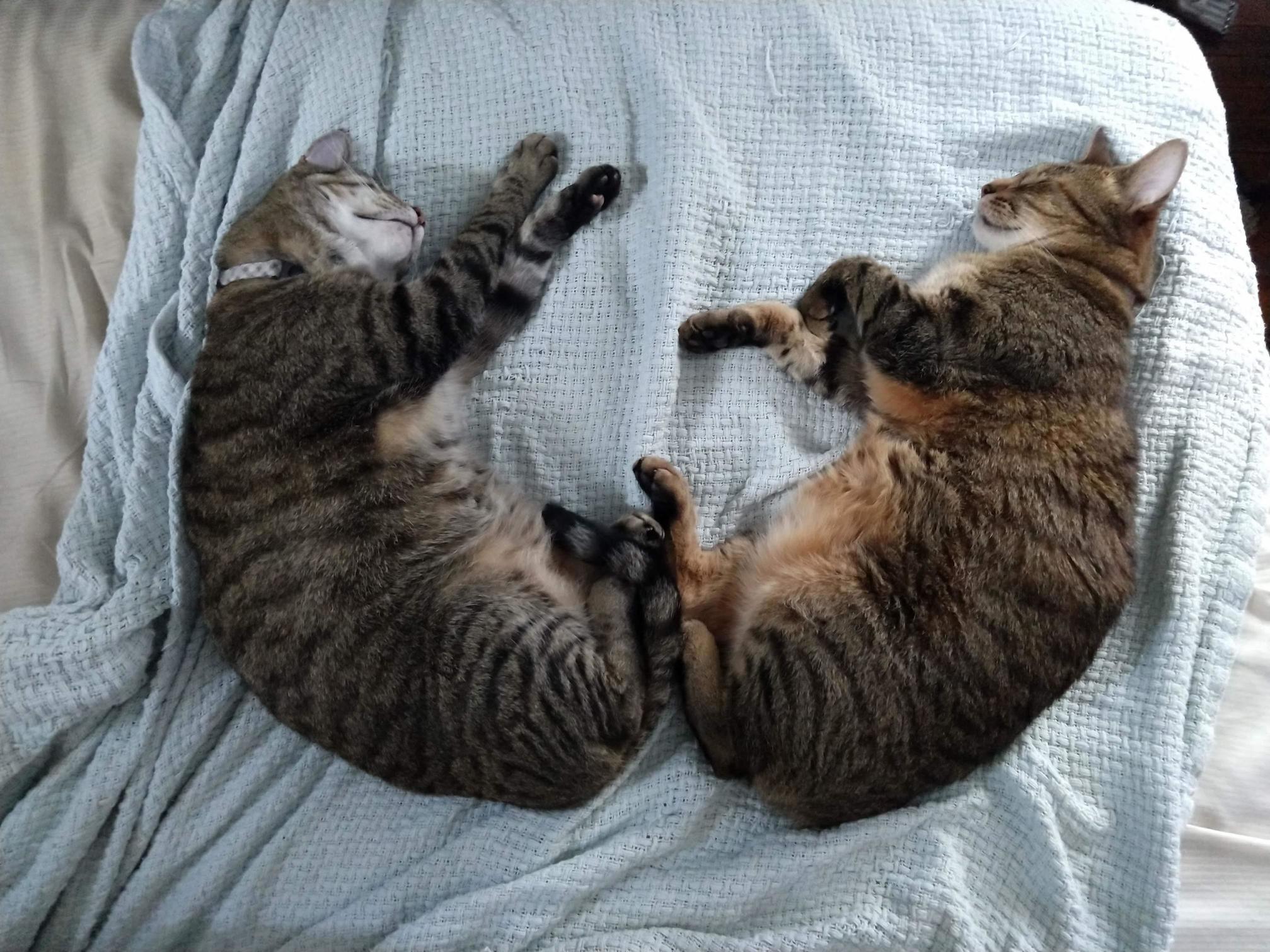 Symmetrical sleepies