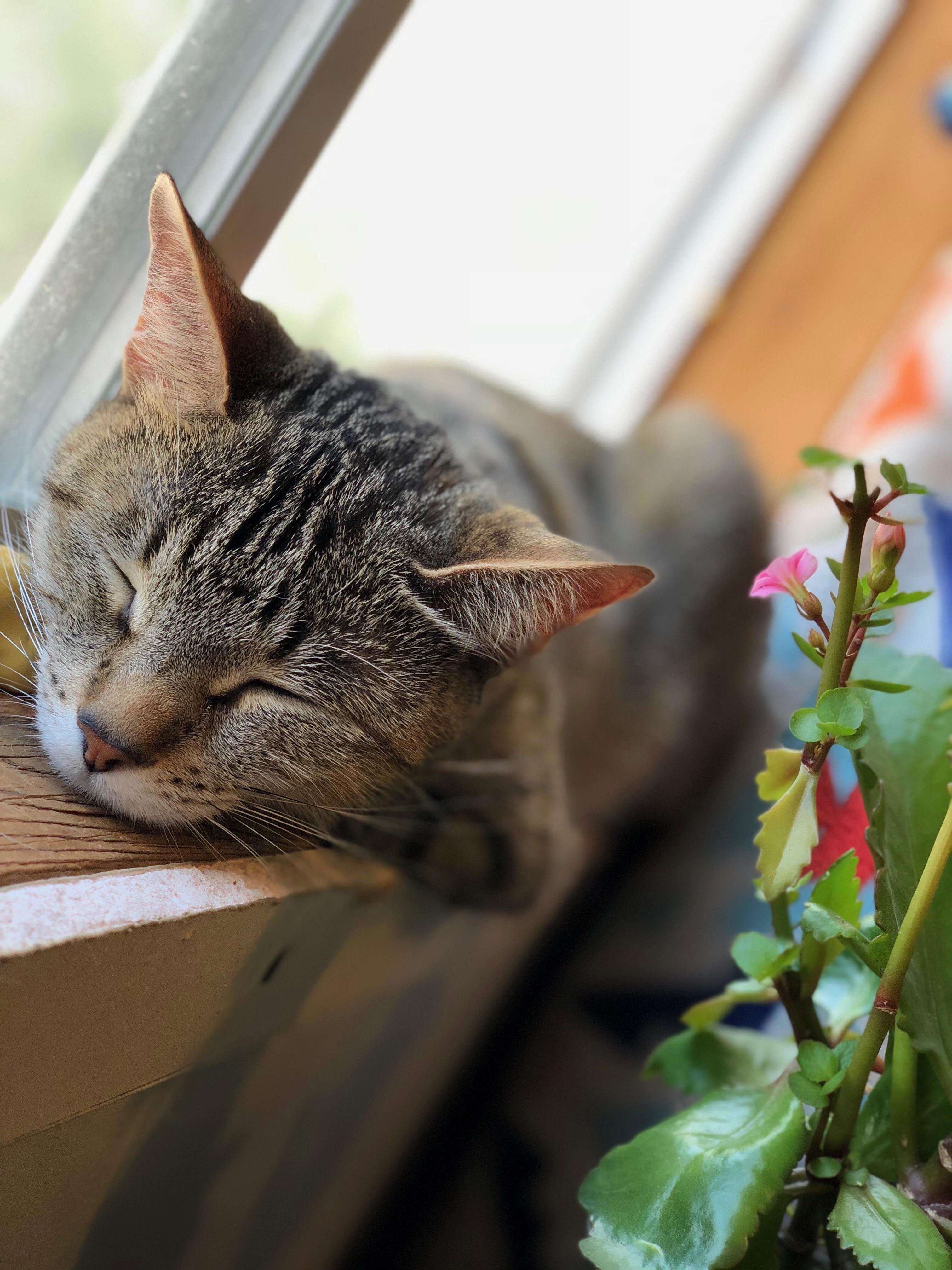 Taking a little nap in the window.