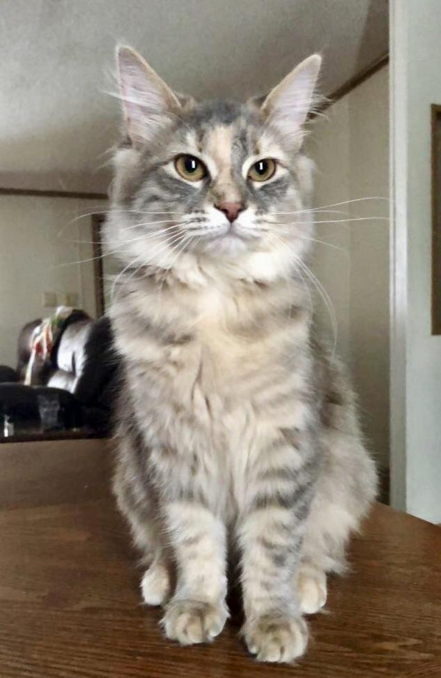 This pretty girl turns 1 next week. my little luma.