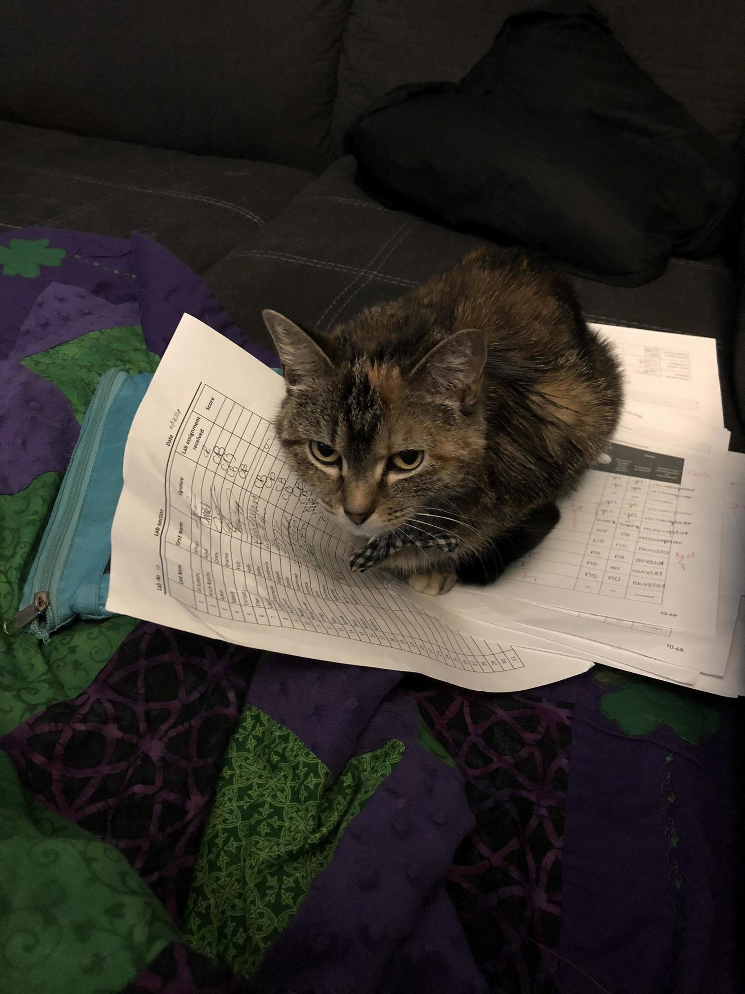 And now salem doesnt want me to grade