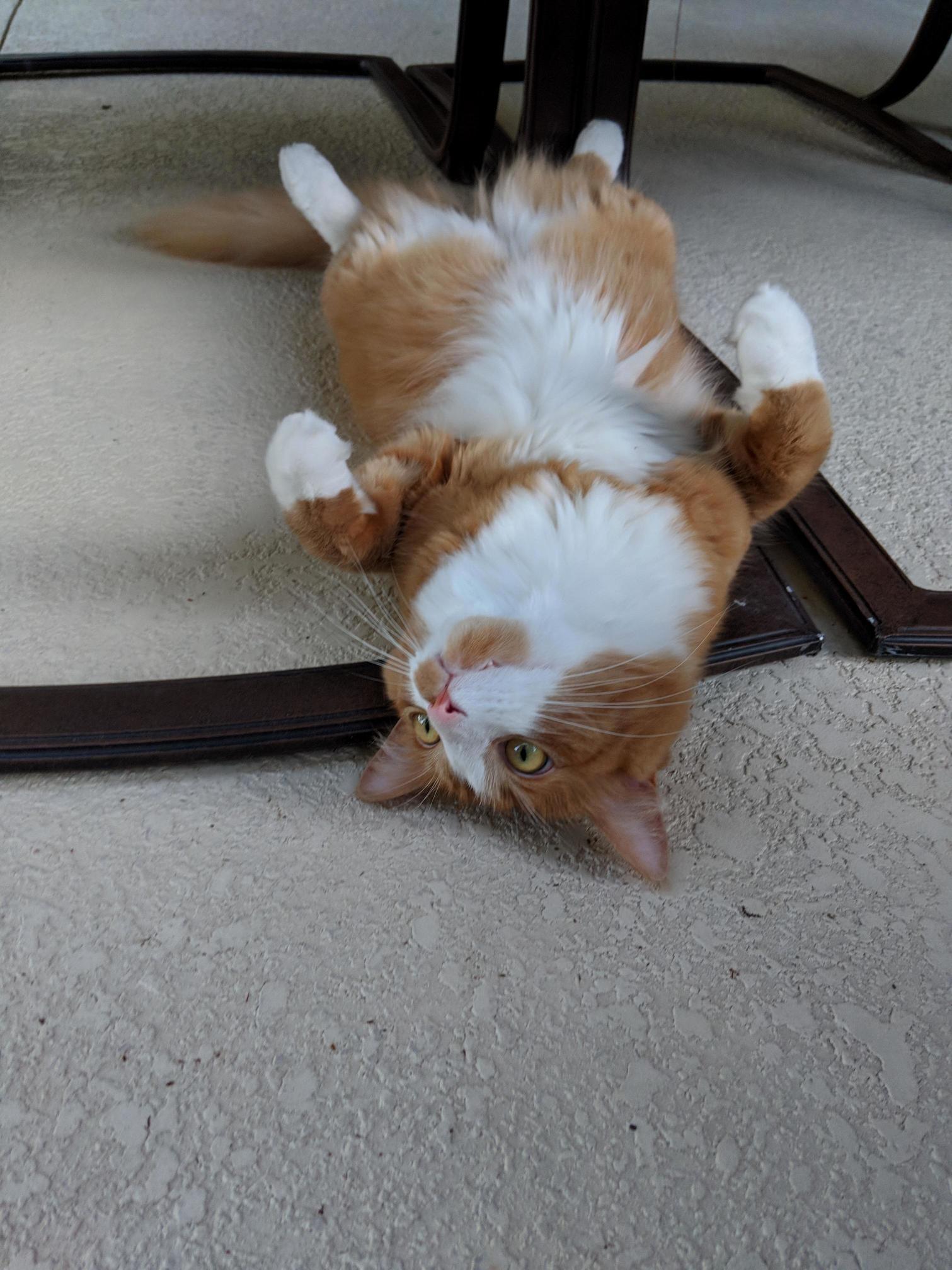 Chewie taking in the summer heat…