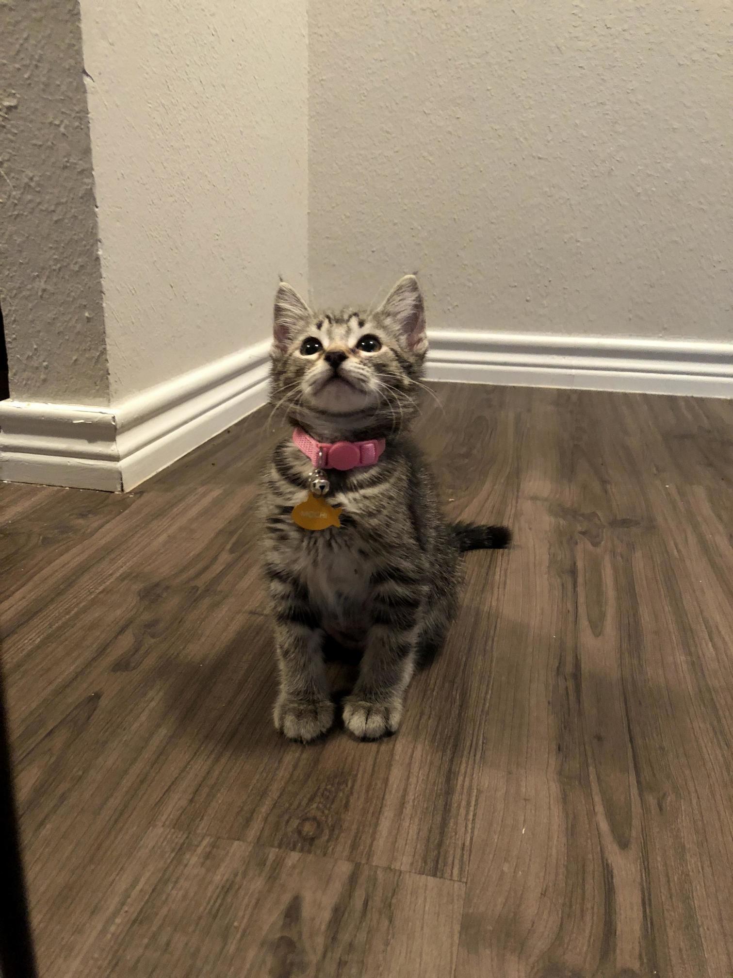 Hi miss cat