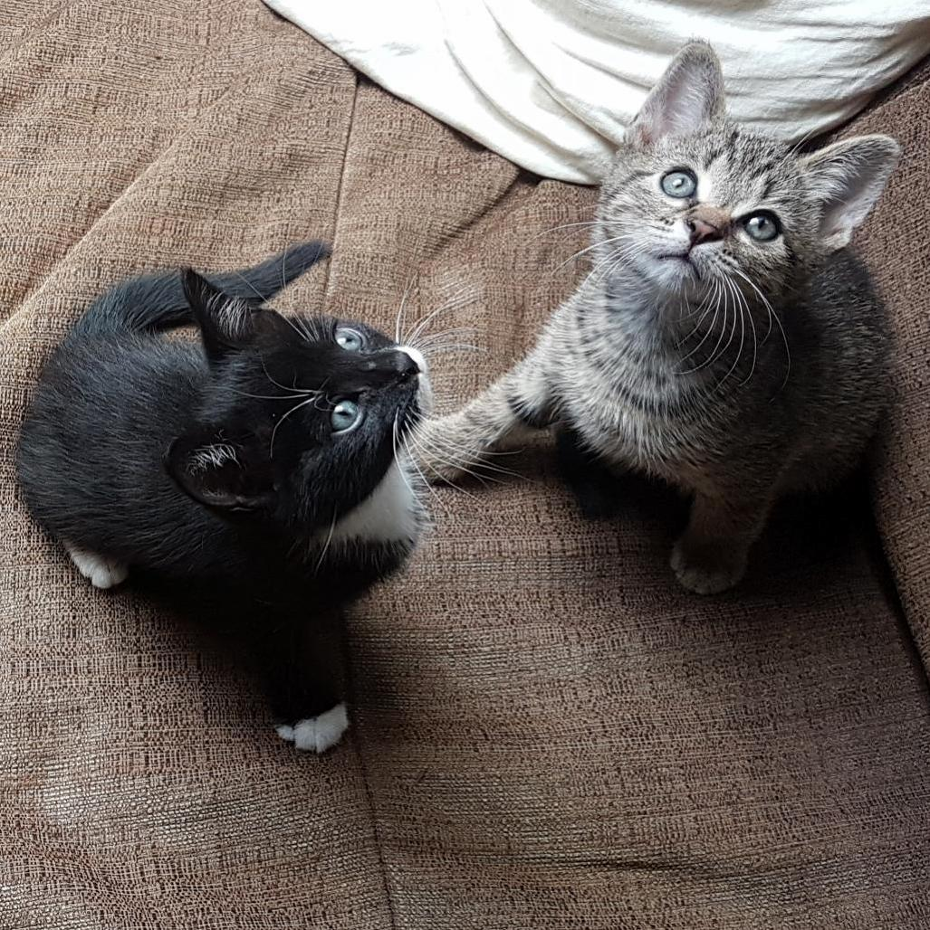 Meet the brothers harvey (black) and oliver at their furrever home since yesterday!