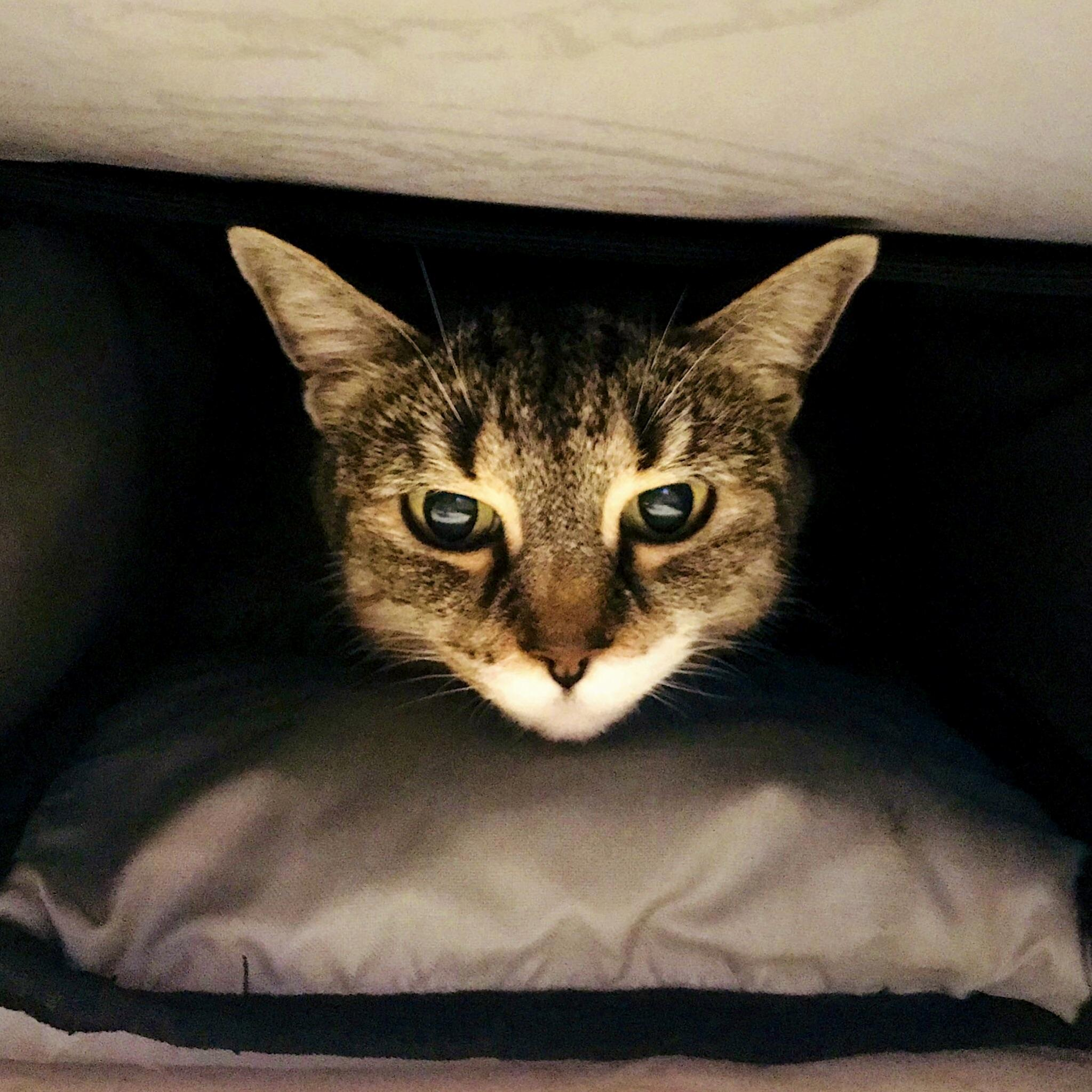 My backpack, the cat cave