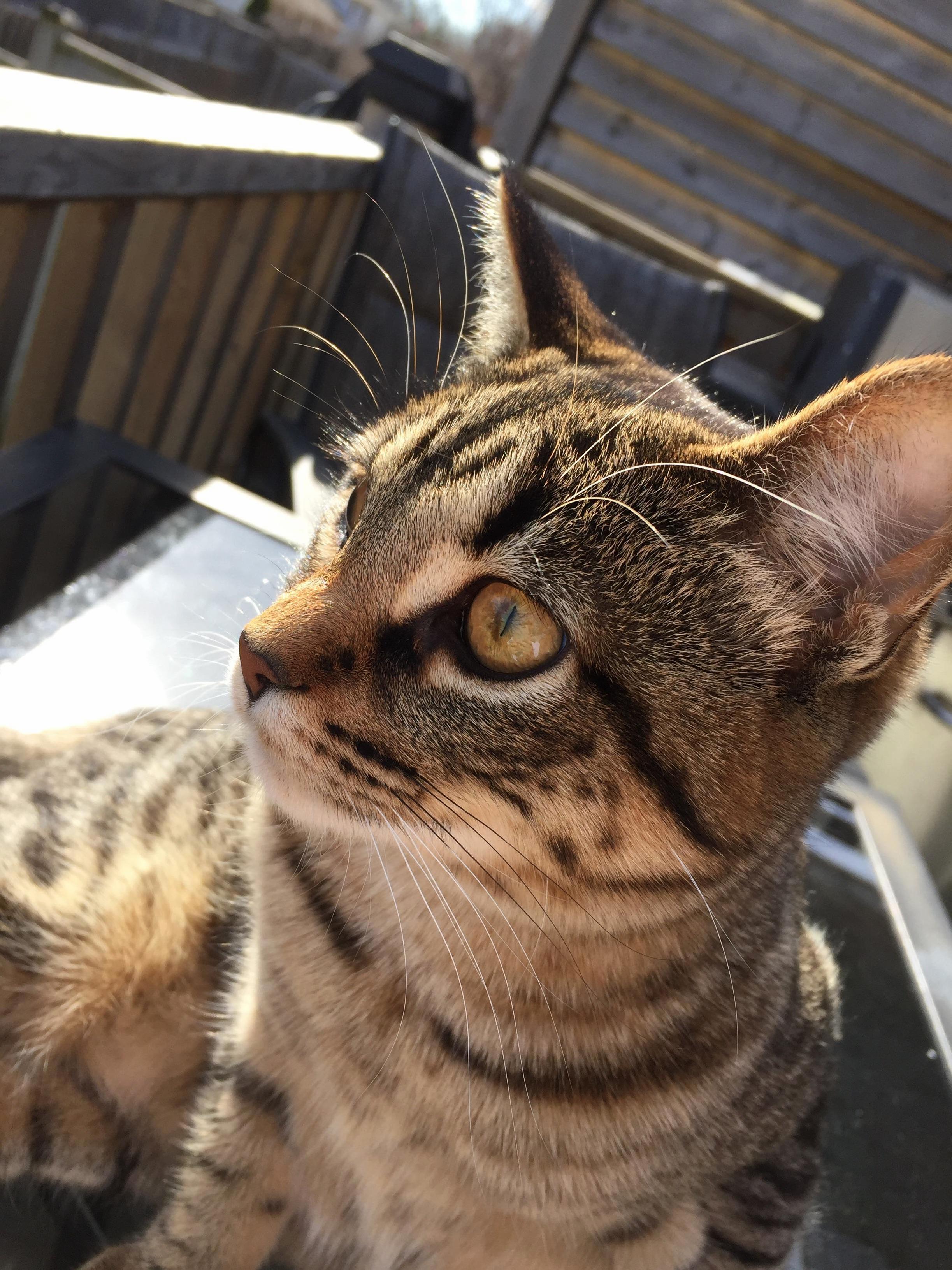 My cat cherry sitting in the sun.