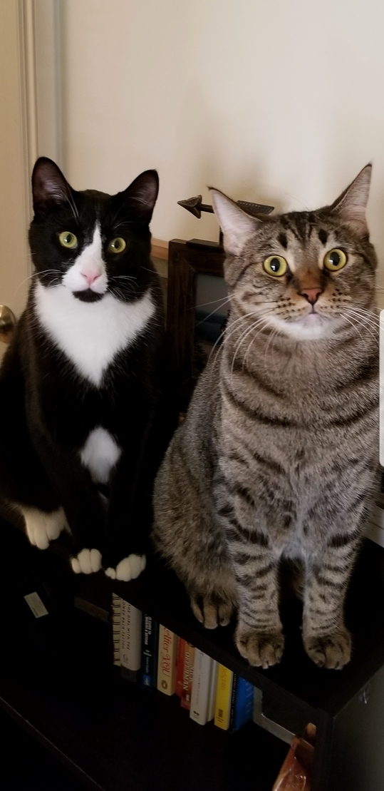 Our two boys, loki and steve!