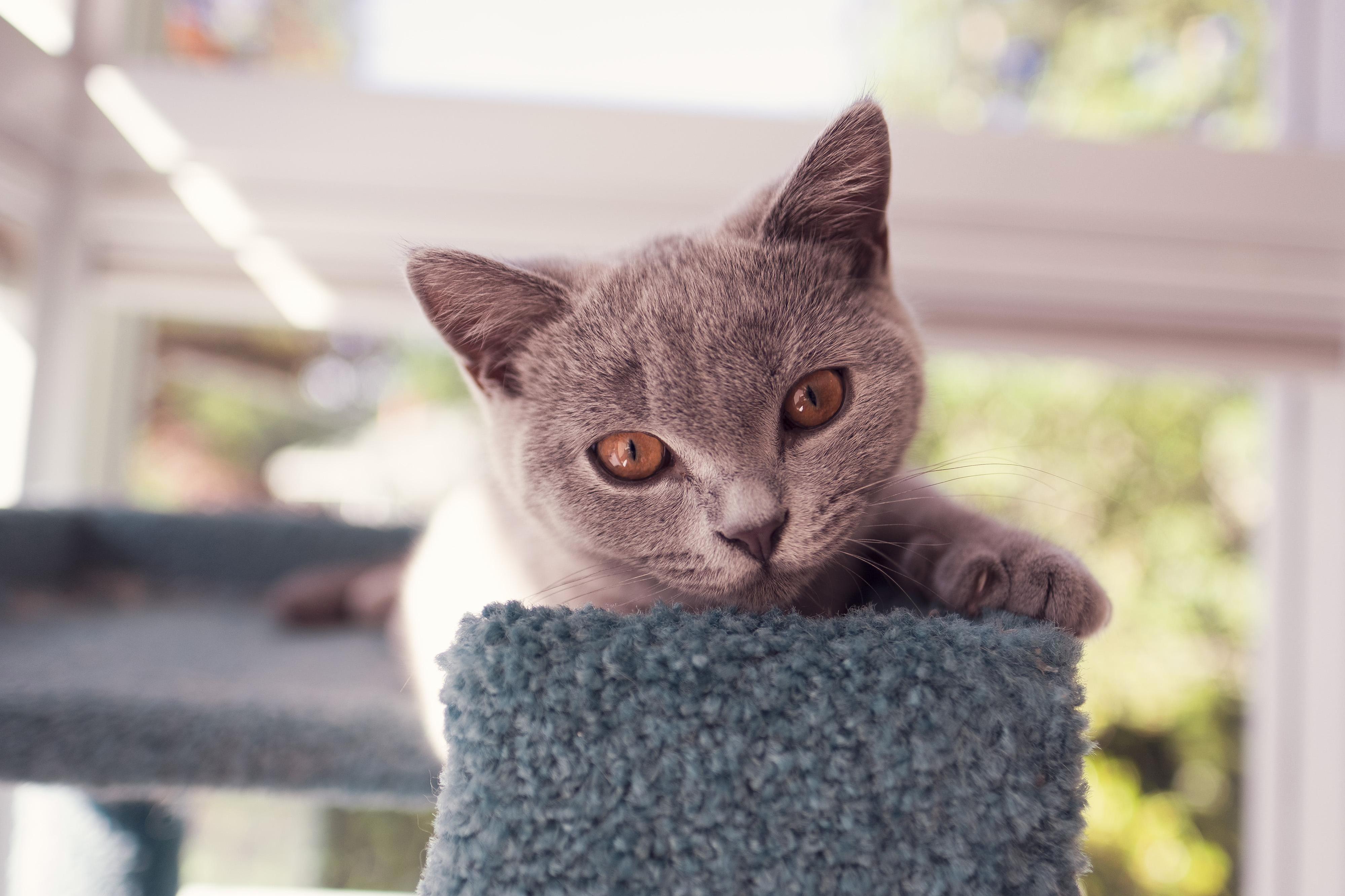 Ozzie on the cat tree