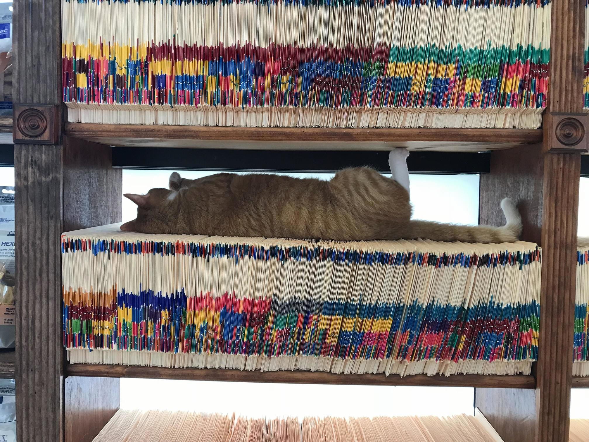 Roger the clinic cat napping on files.