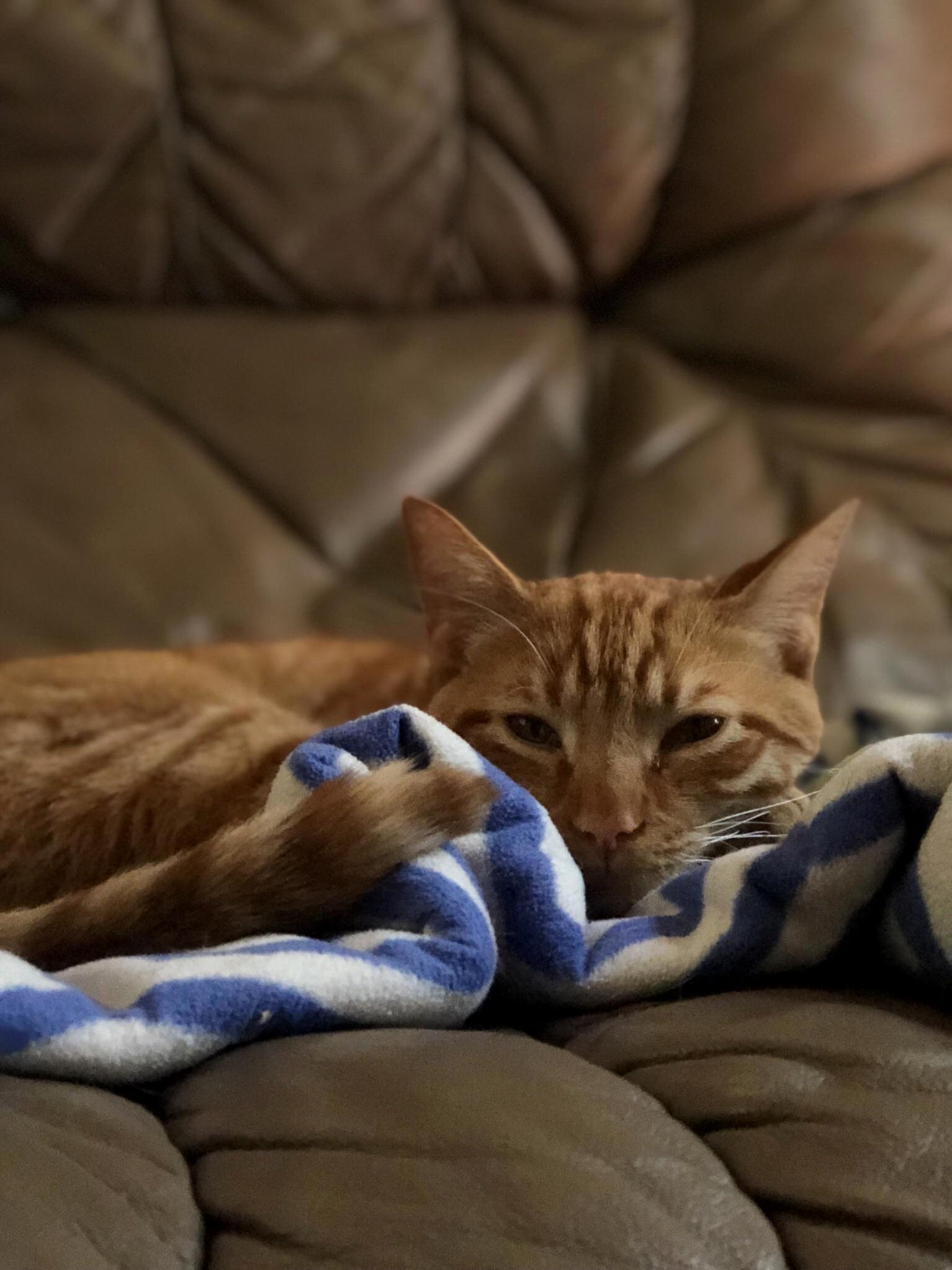 Sleepy ginger boy!