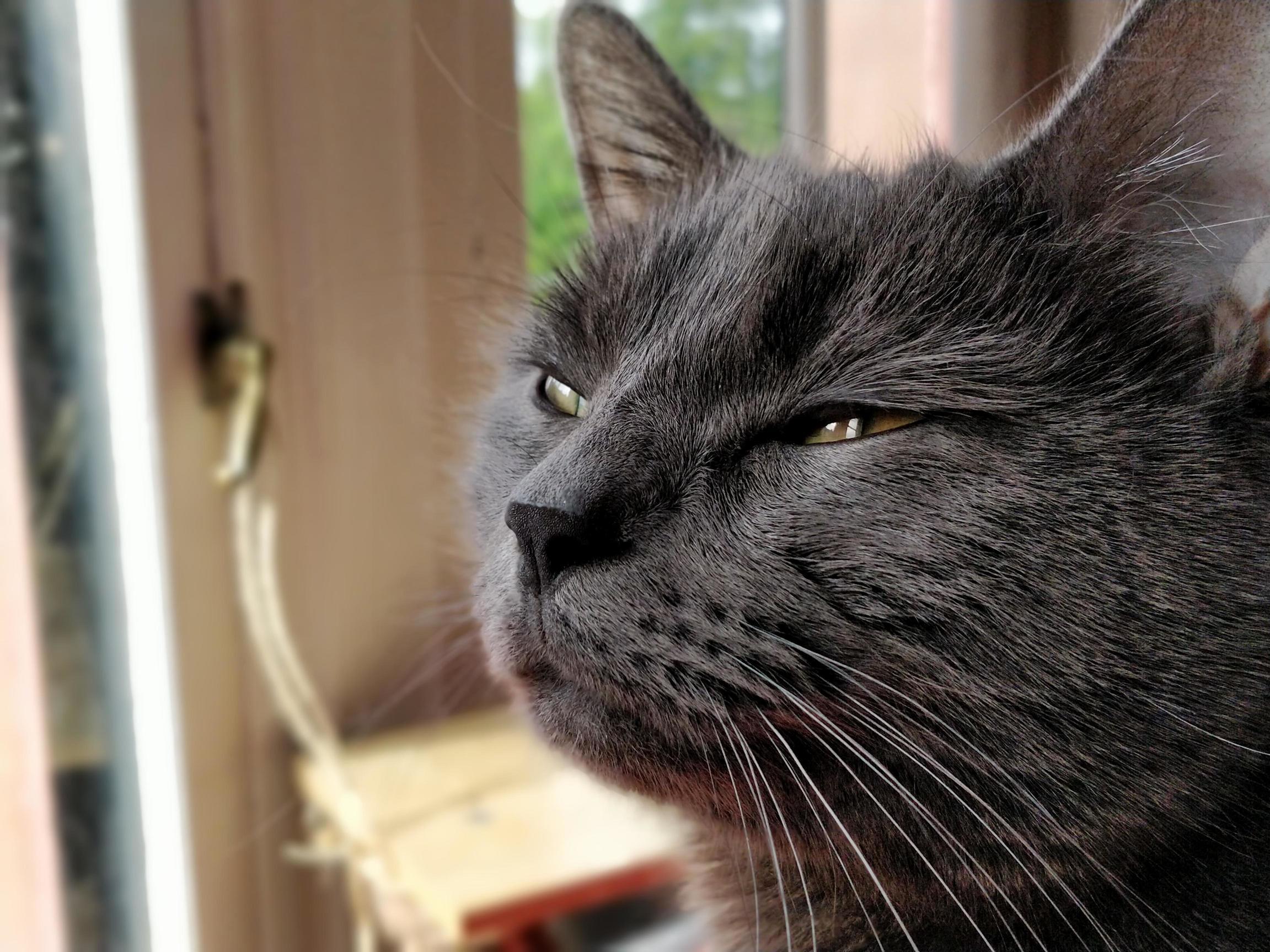 Smokey joe and his discerning stare