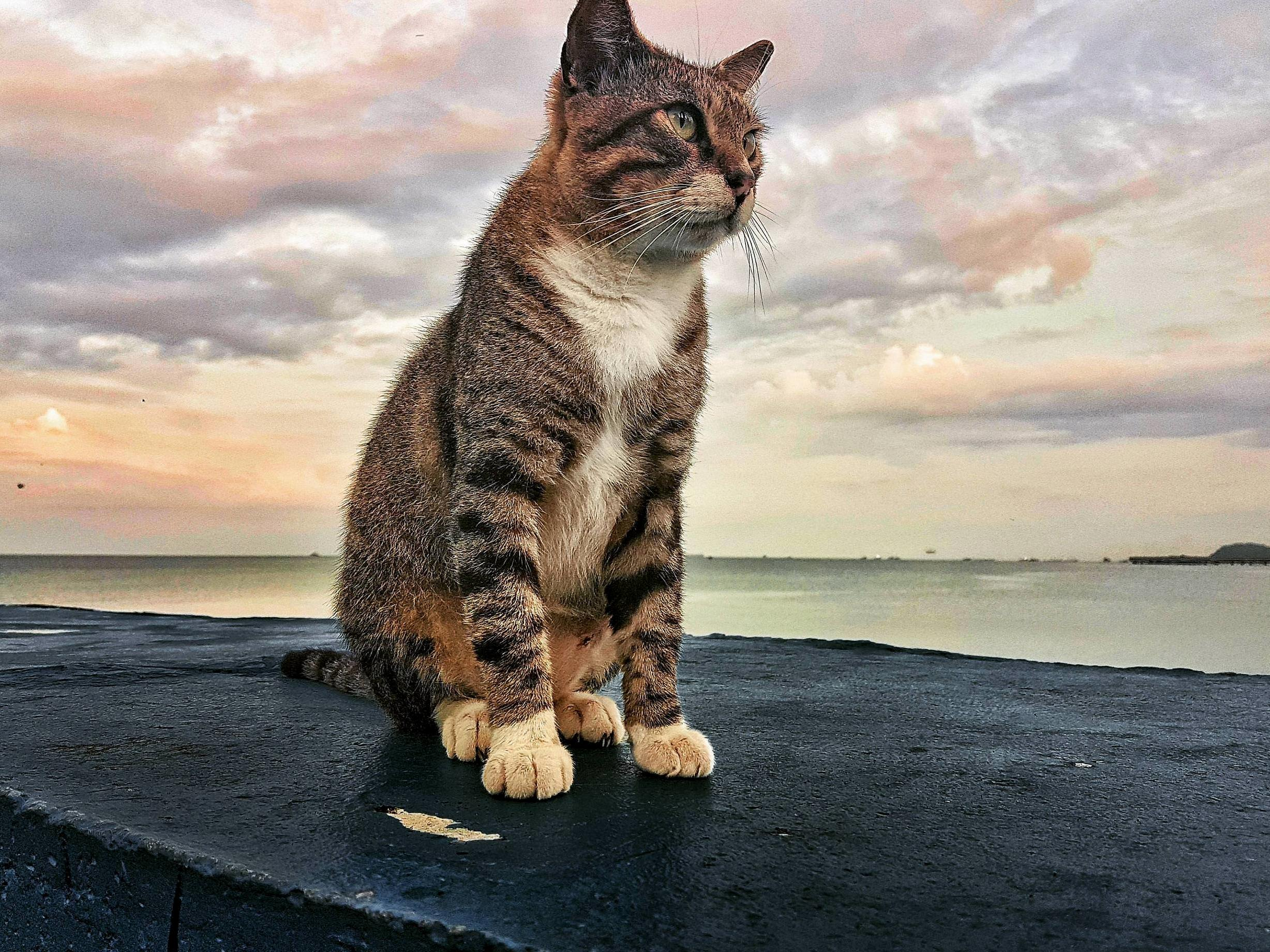 Street kitty gazing into the distance (oc)