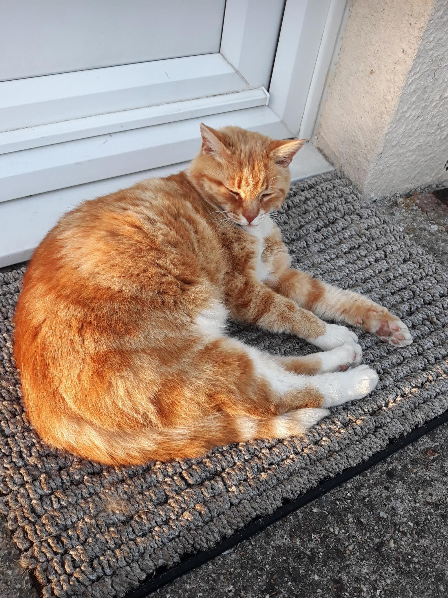 The neighbours cats likes sleeping on my door step. love getting cuddles when i get home