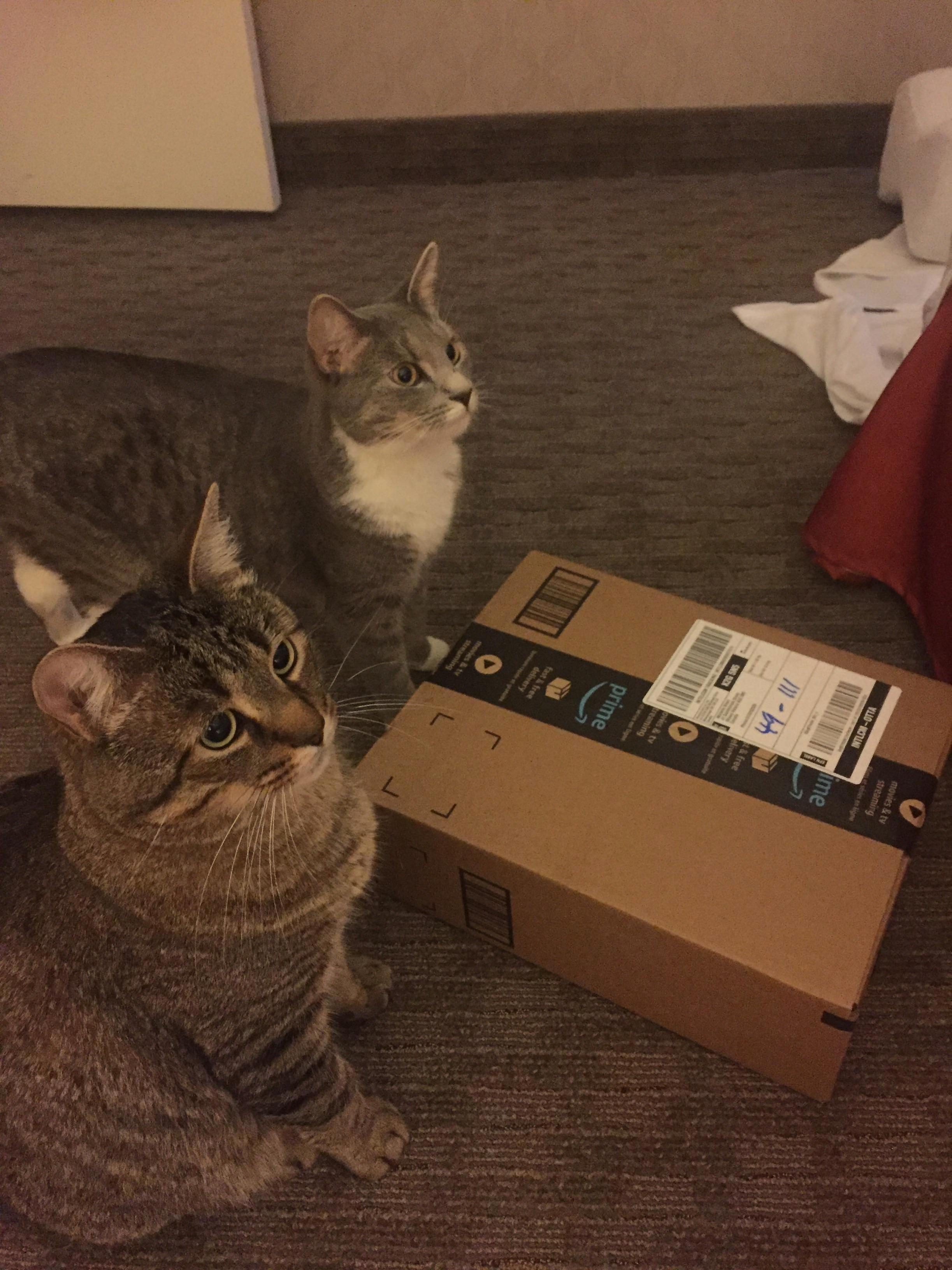 Today is my husbands birthday. miguel and misty eagerly waited to give him his gift this morning (even if it was just to get the box)