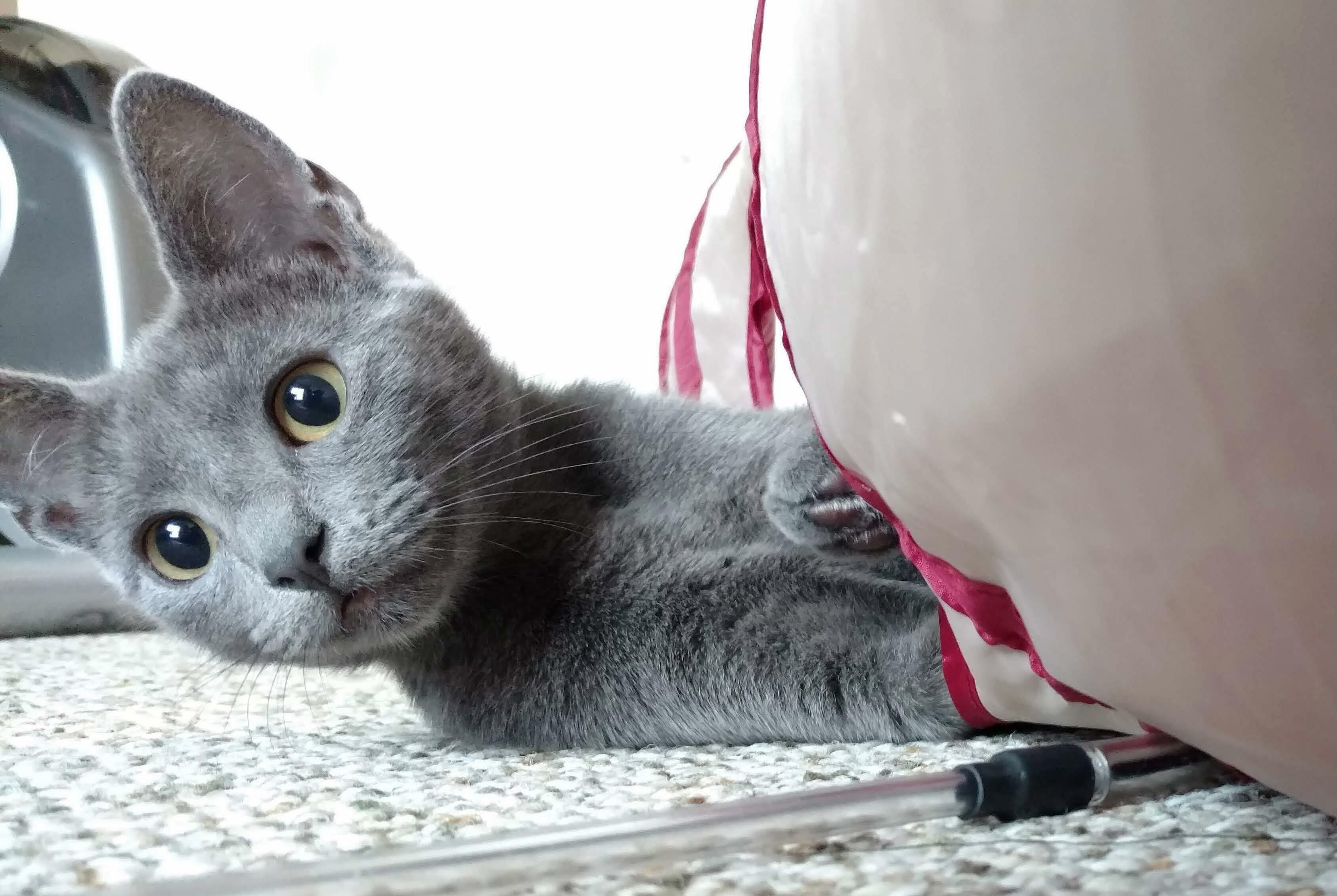 Enjoying her new tunnel!
