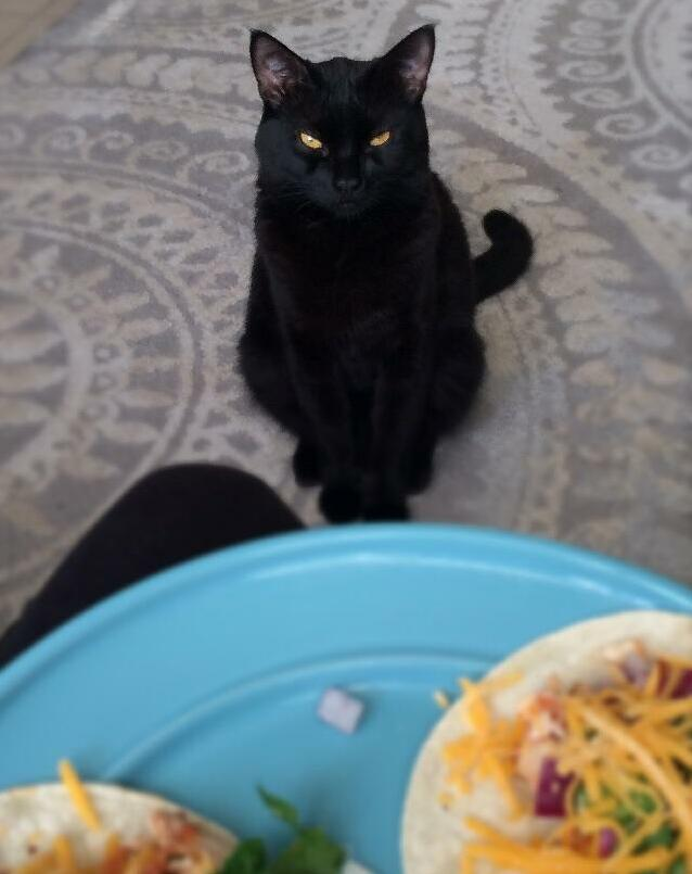 If he stares into my soul long enough he thinks hell get a taco. hes usually right.