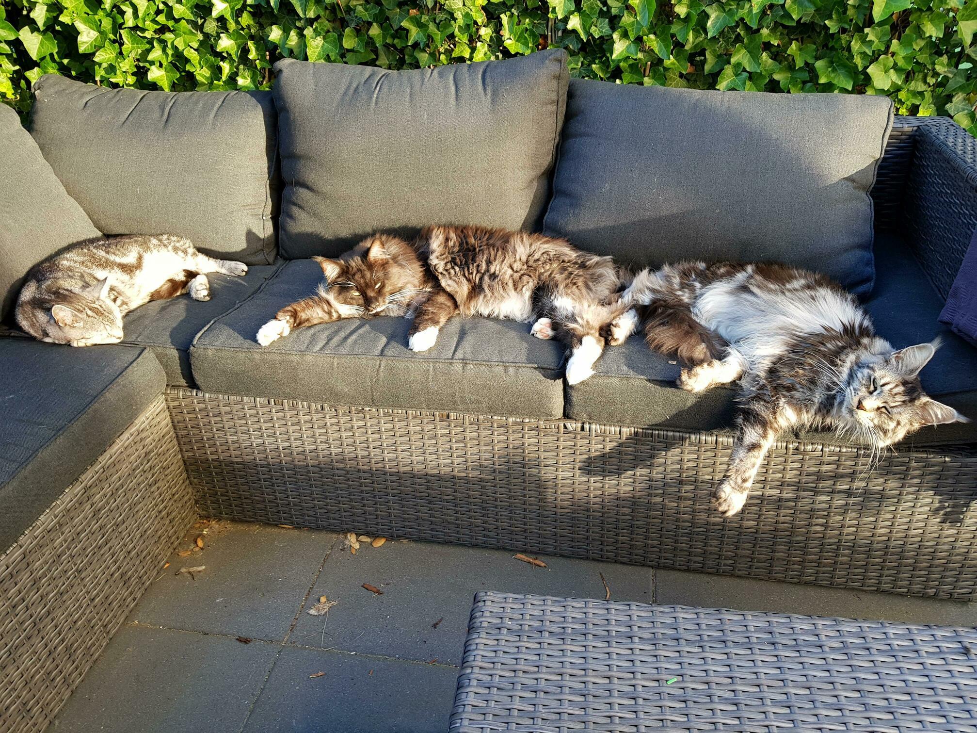 Just my 3 cats enjoying the evening sun