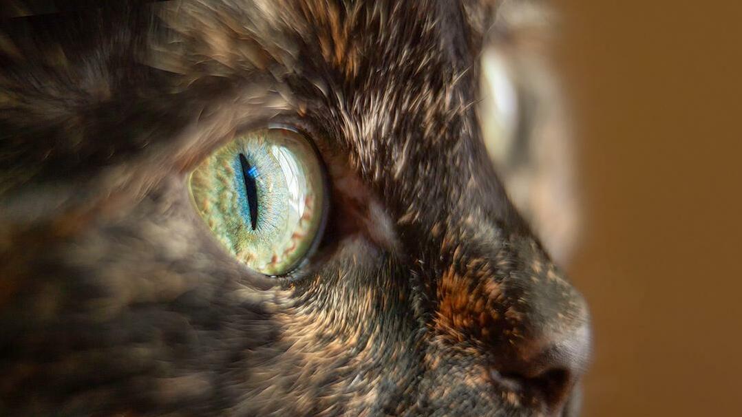 Kikis eye