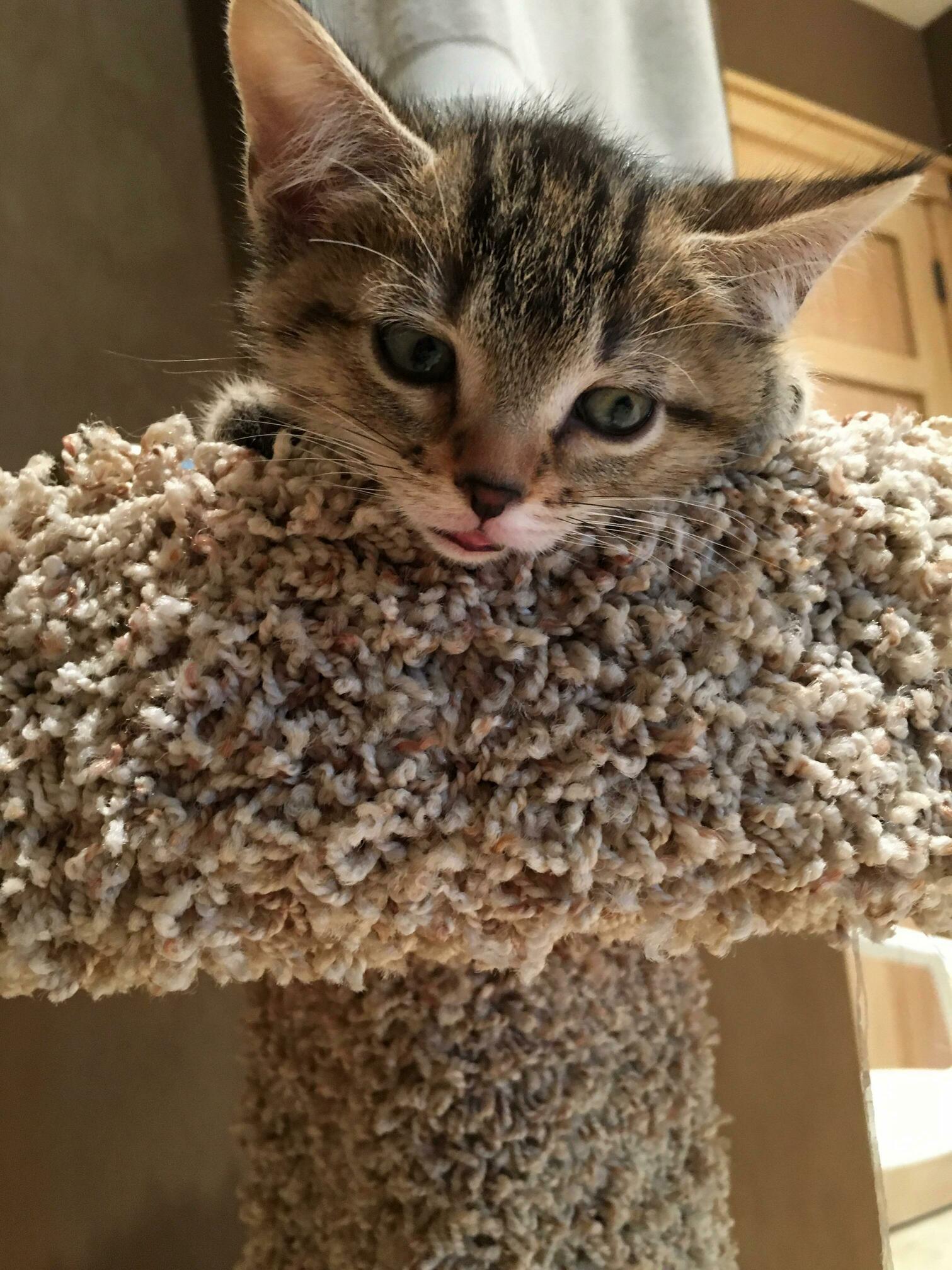 Kitten blep