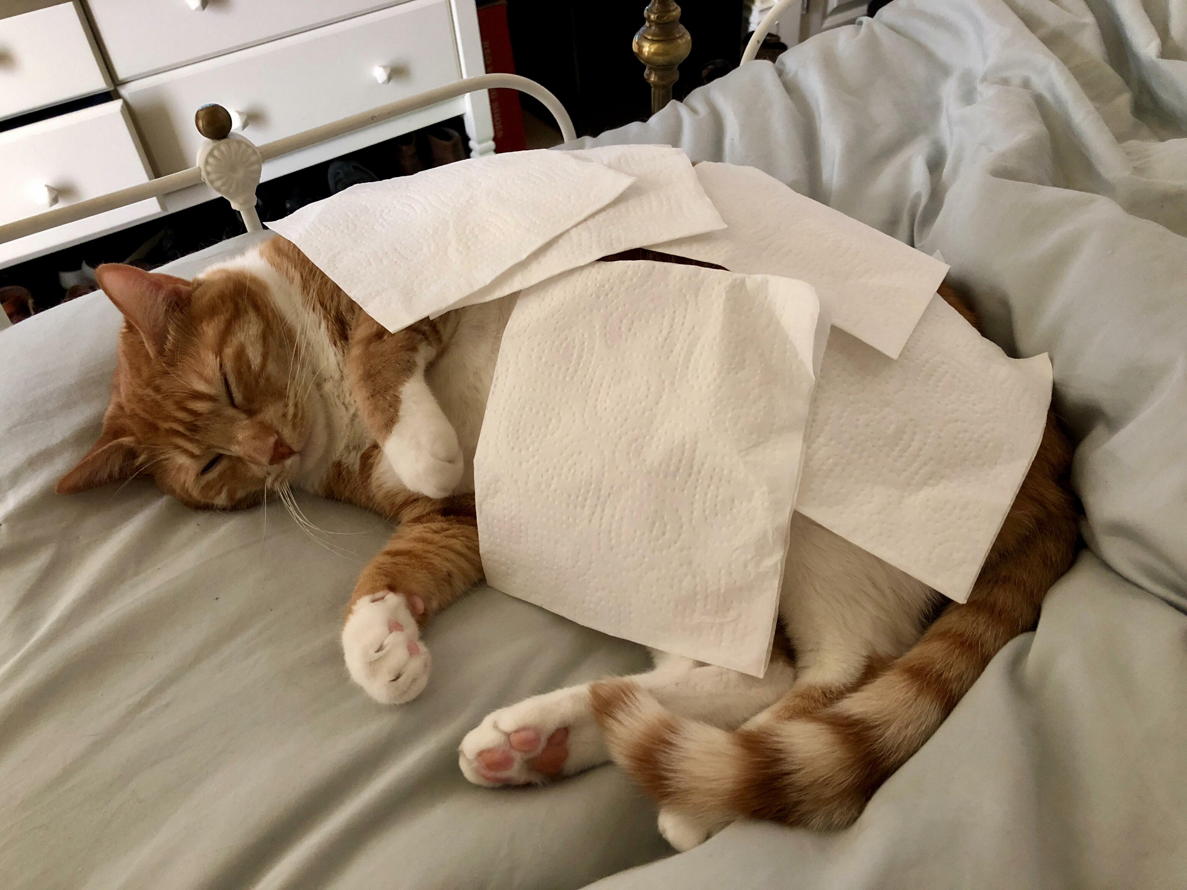 Little napkin nap