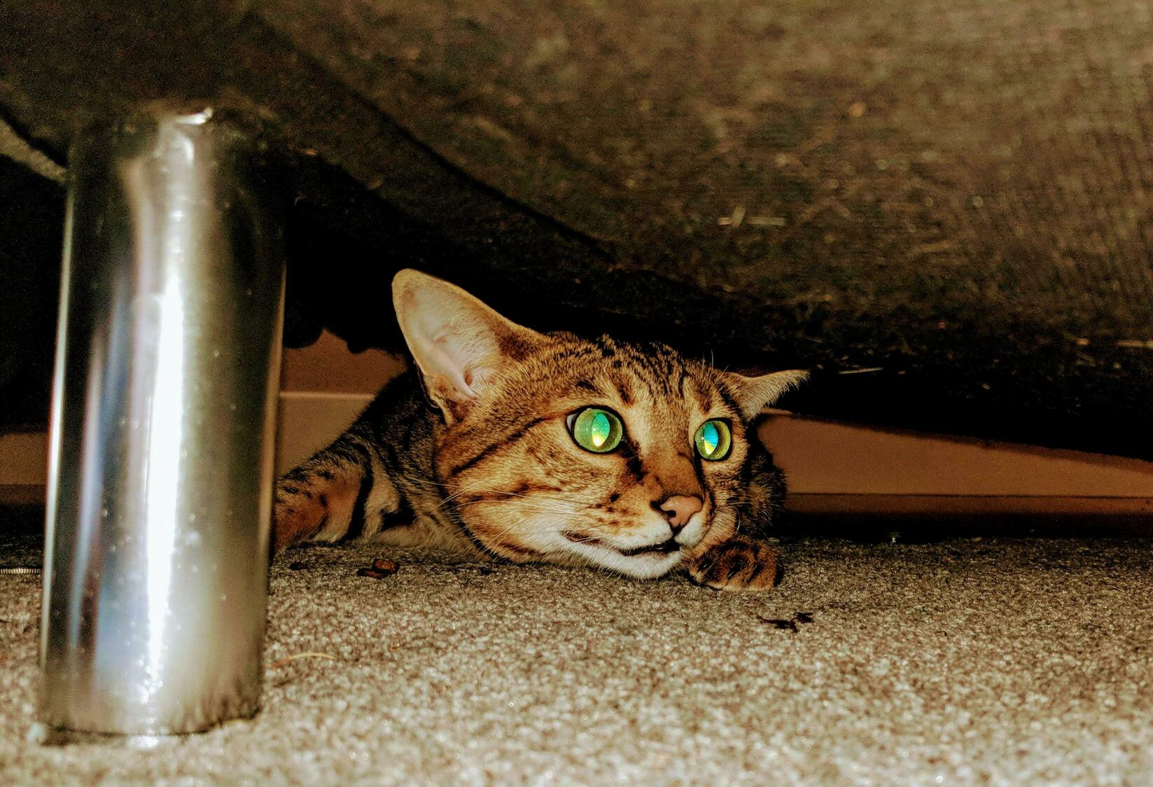 Luna hiding from the bad motor bikes outside, before scavenging for leftovers under the couch
