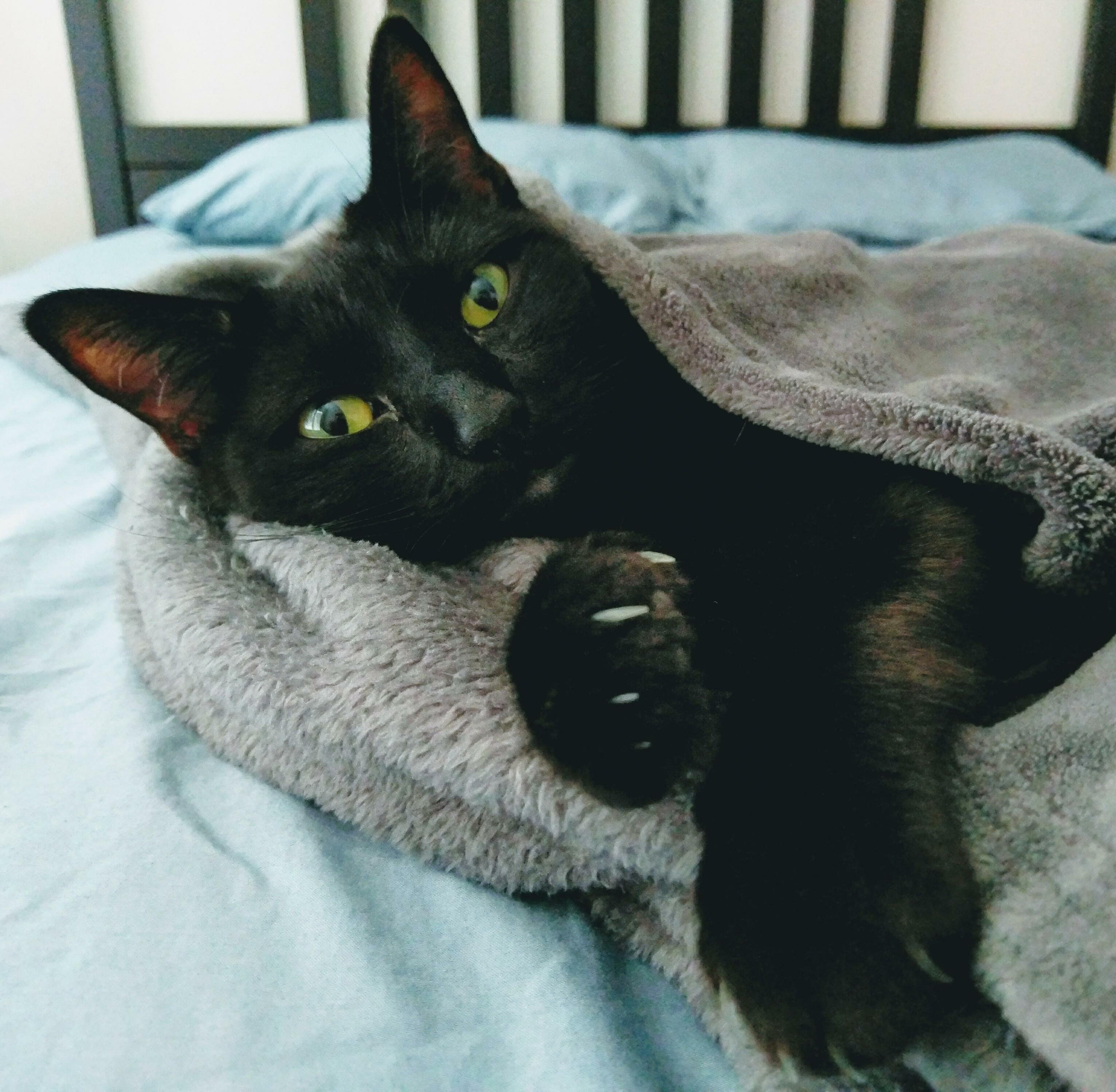 Marie was found in an alley with a litter of kittens. a few years later and she has a blanket to keep her warm from the summer chills.