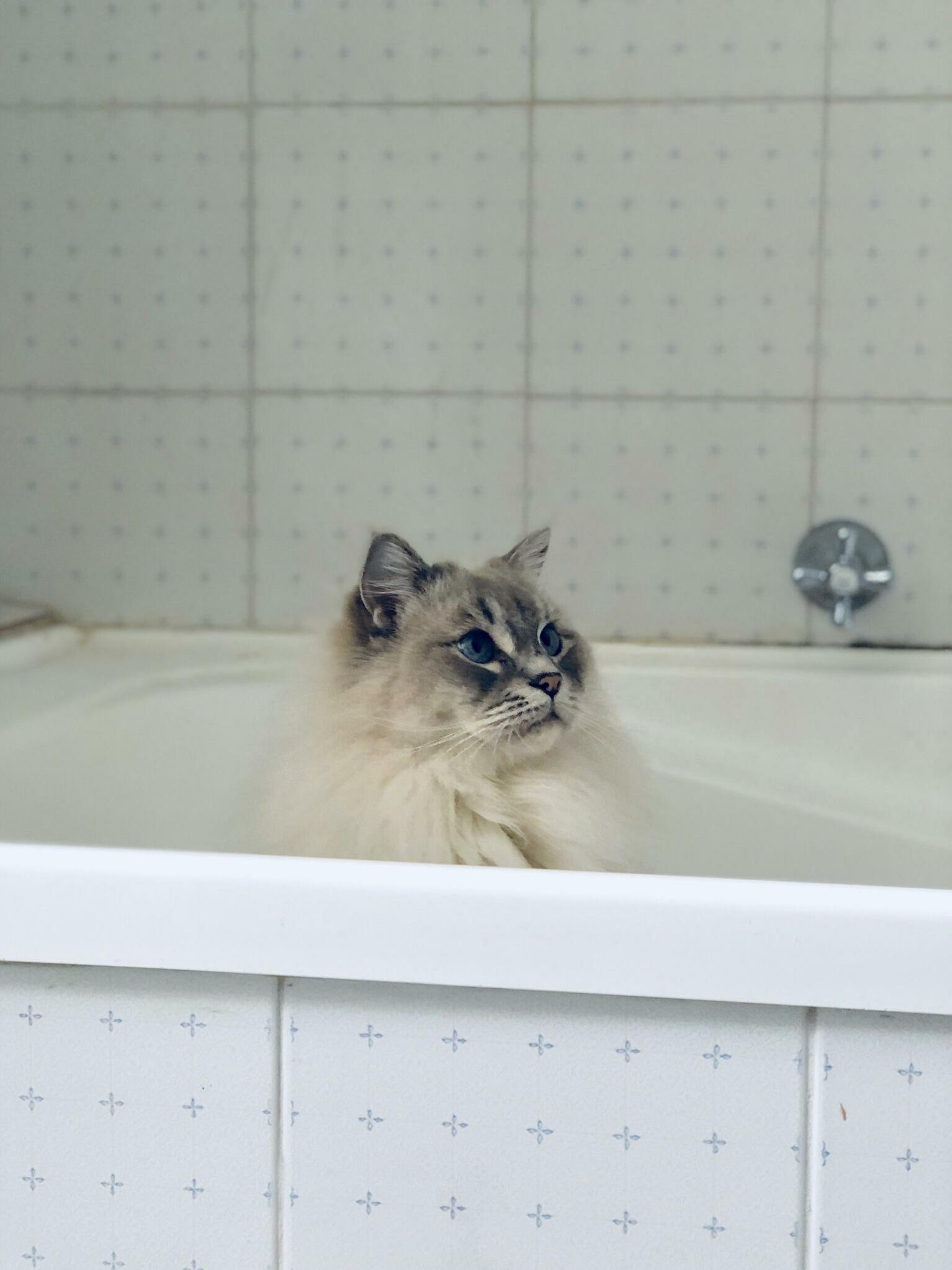 Moose likes to sit in the bath and look pretty