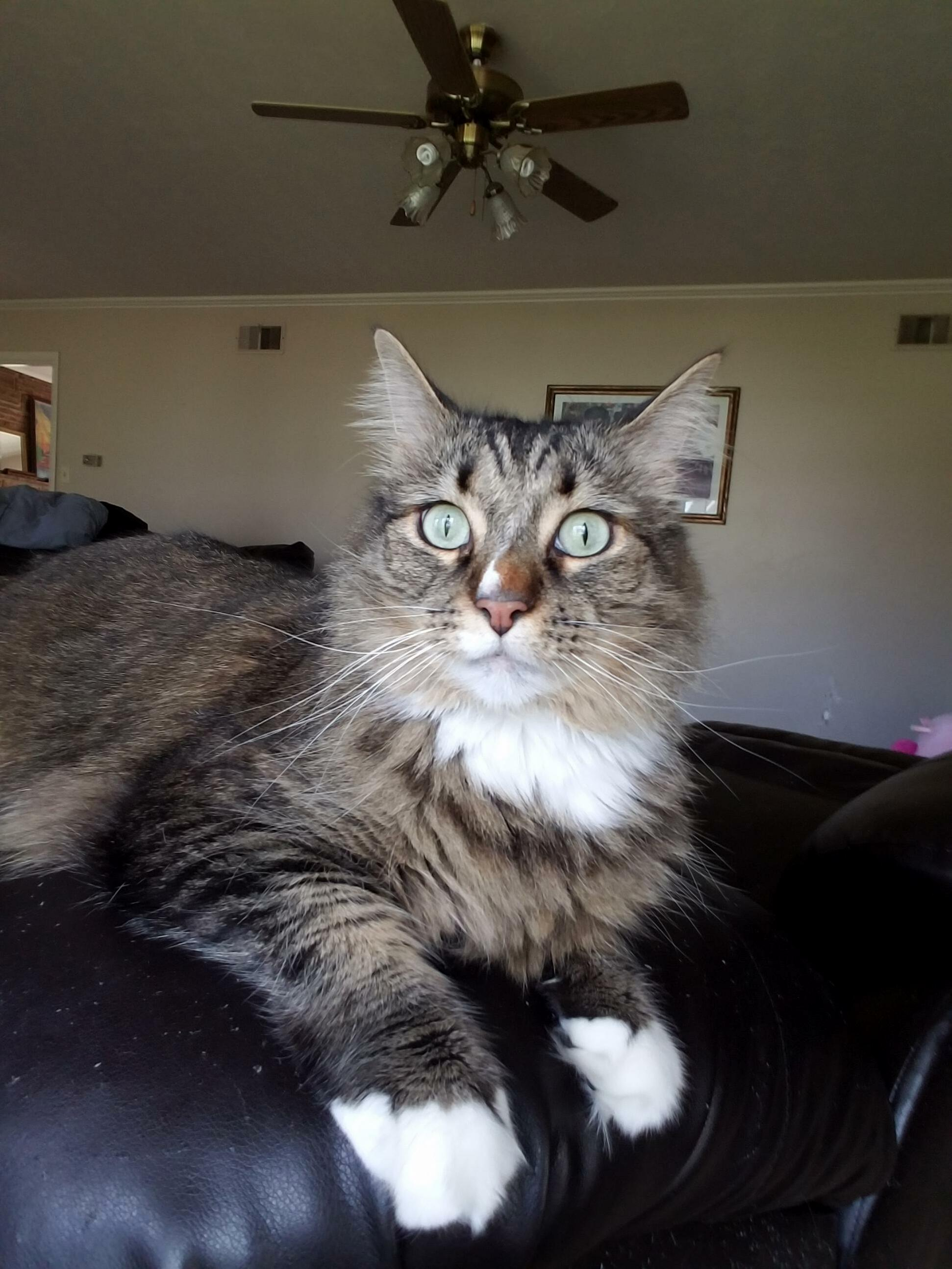 Mr. kitty.