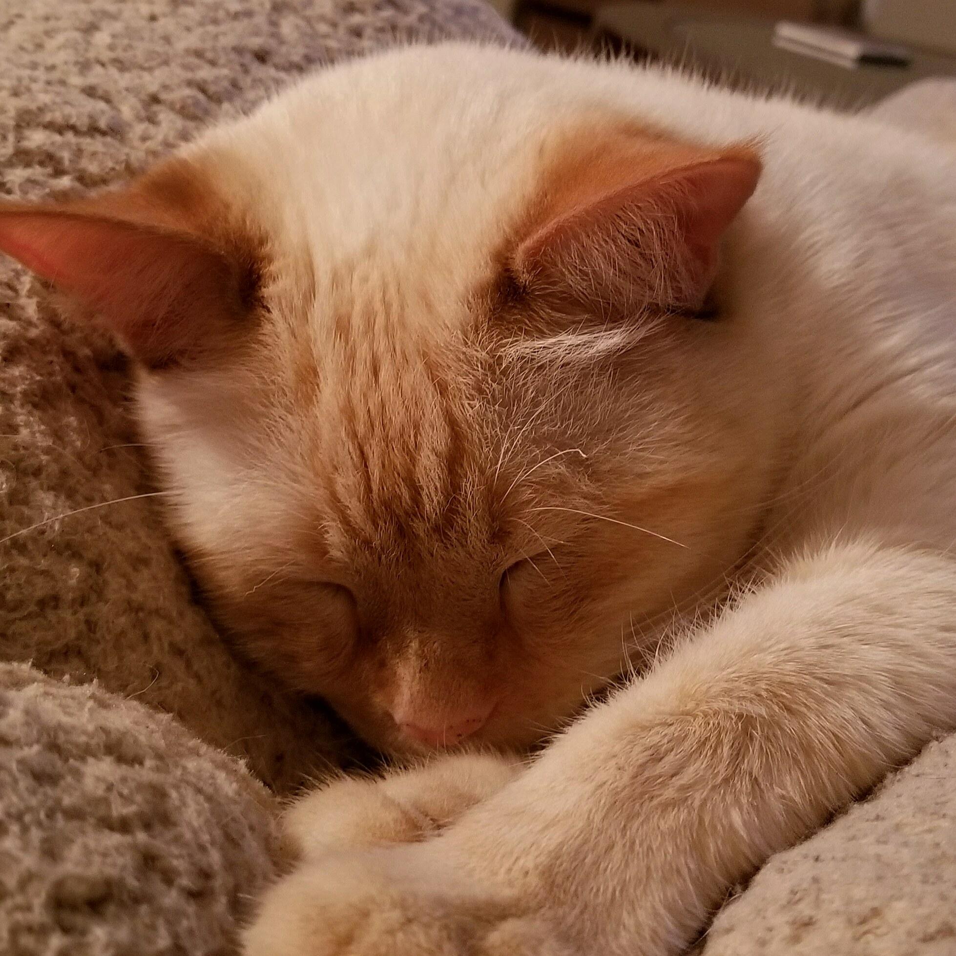 Mr. mouth enjoying his kush cat life