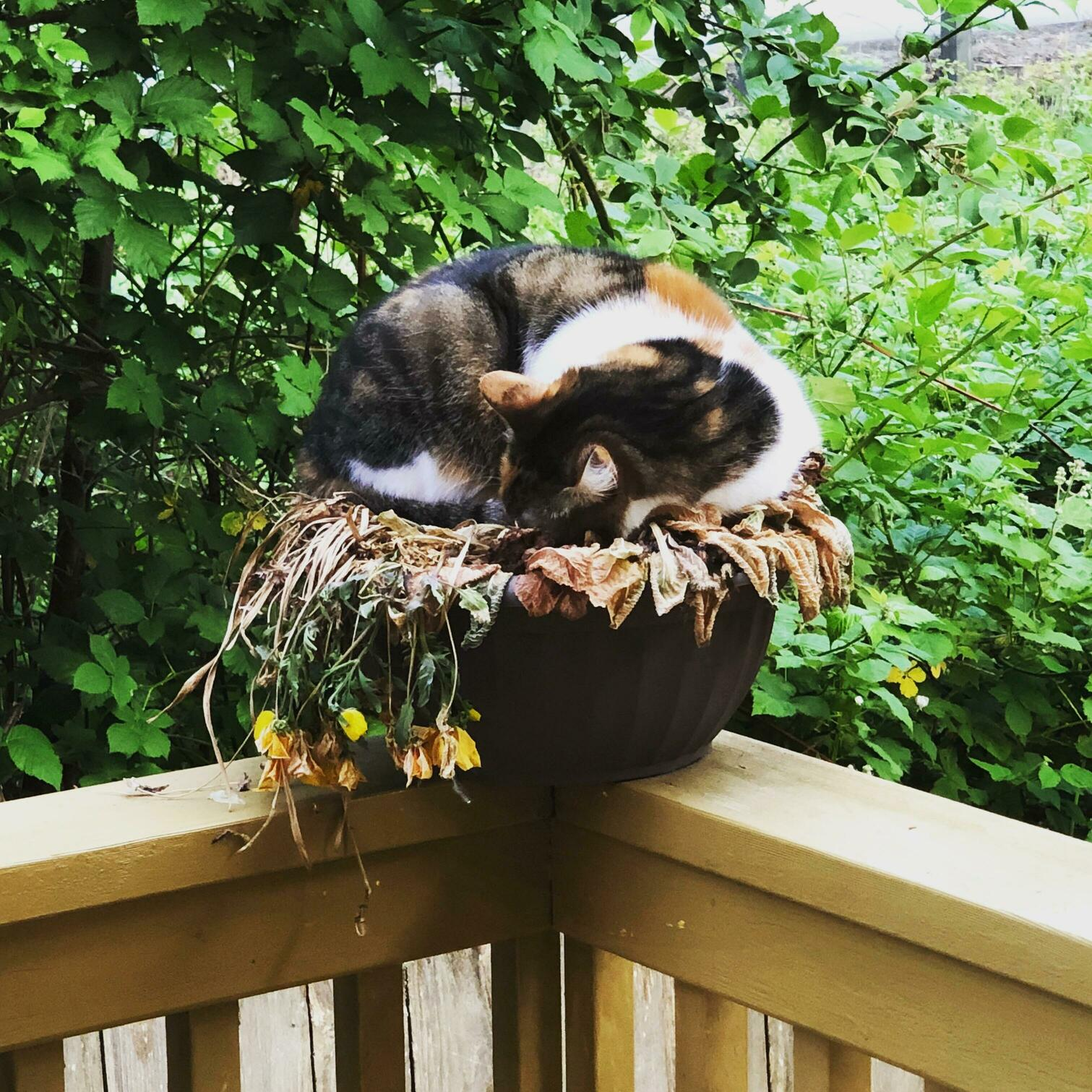 My cat crop is coming in nicely this year