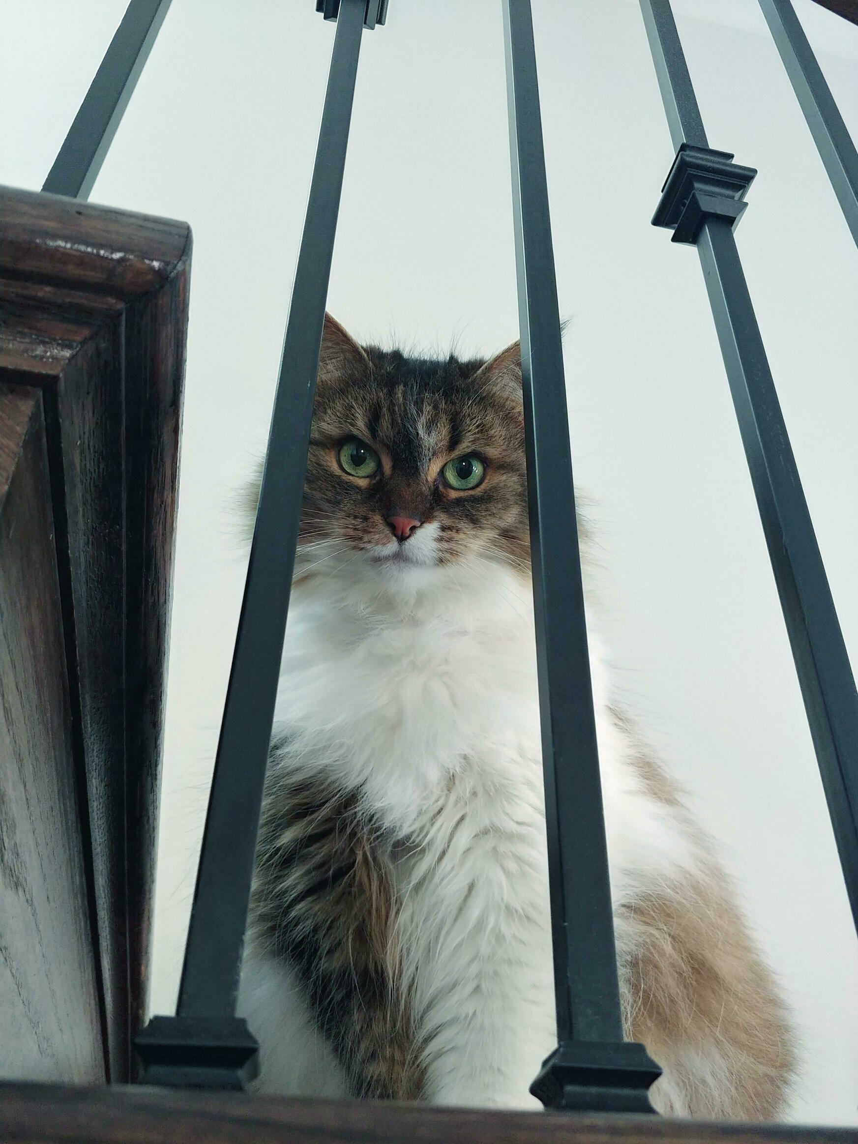 My mystical mainecoon kitty