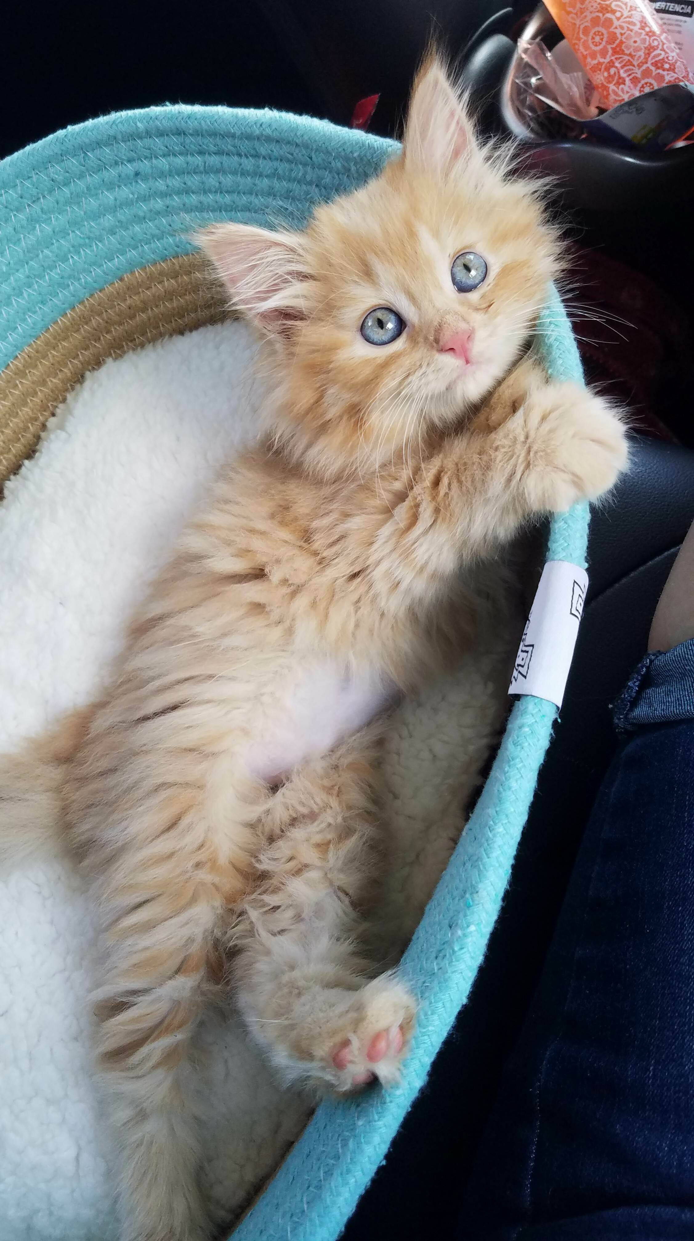 My new baby, tigger!