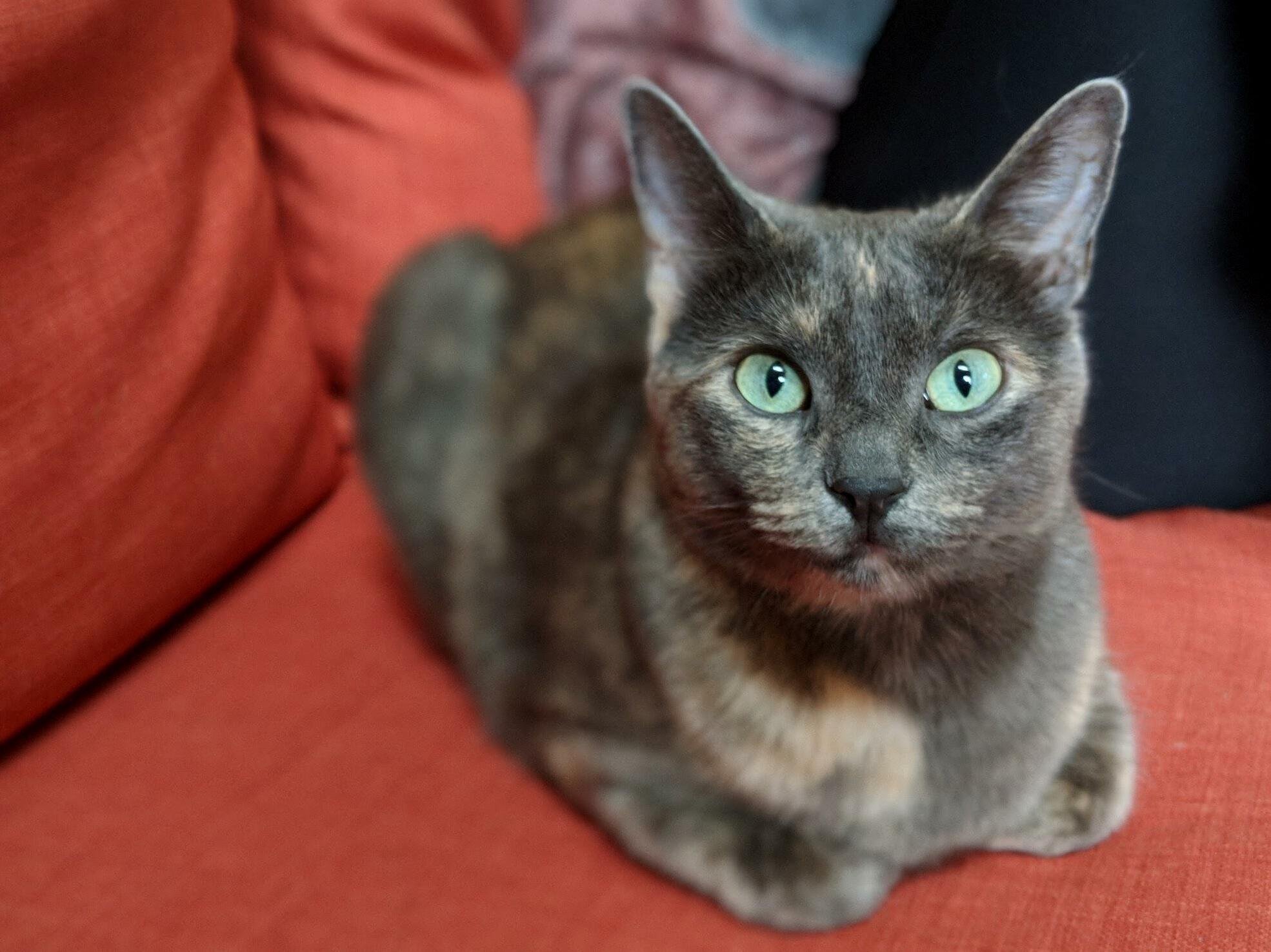 My perfect little loaf, atari