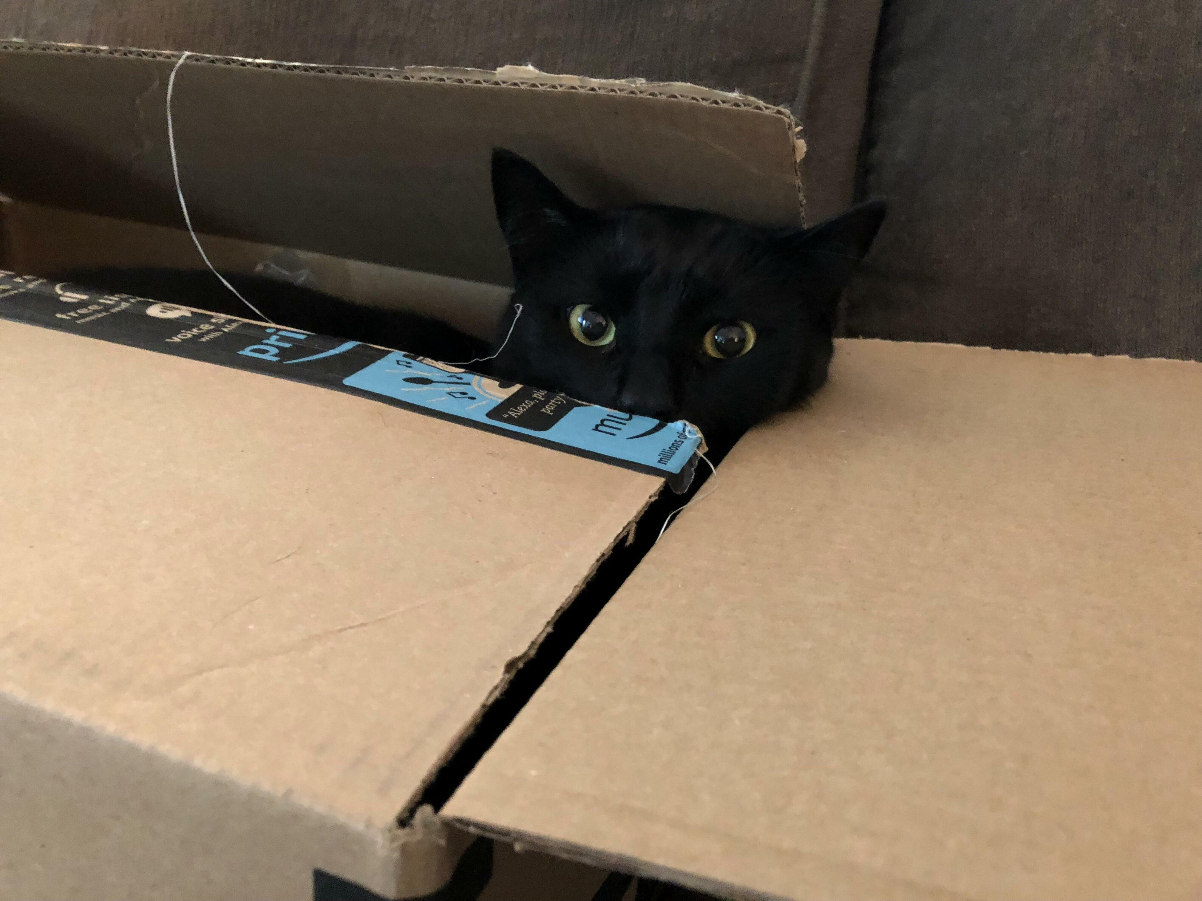 New cat trap is dexter approved…5 stars!