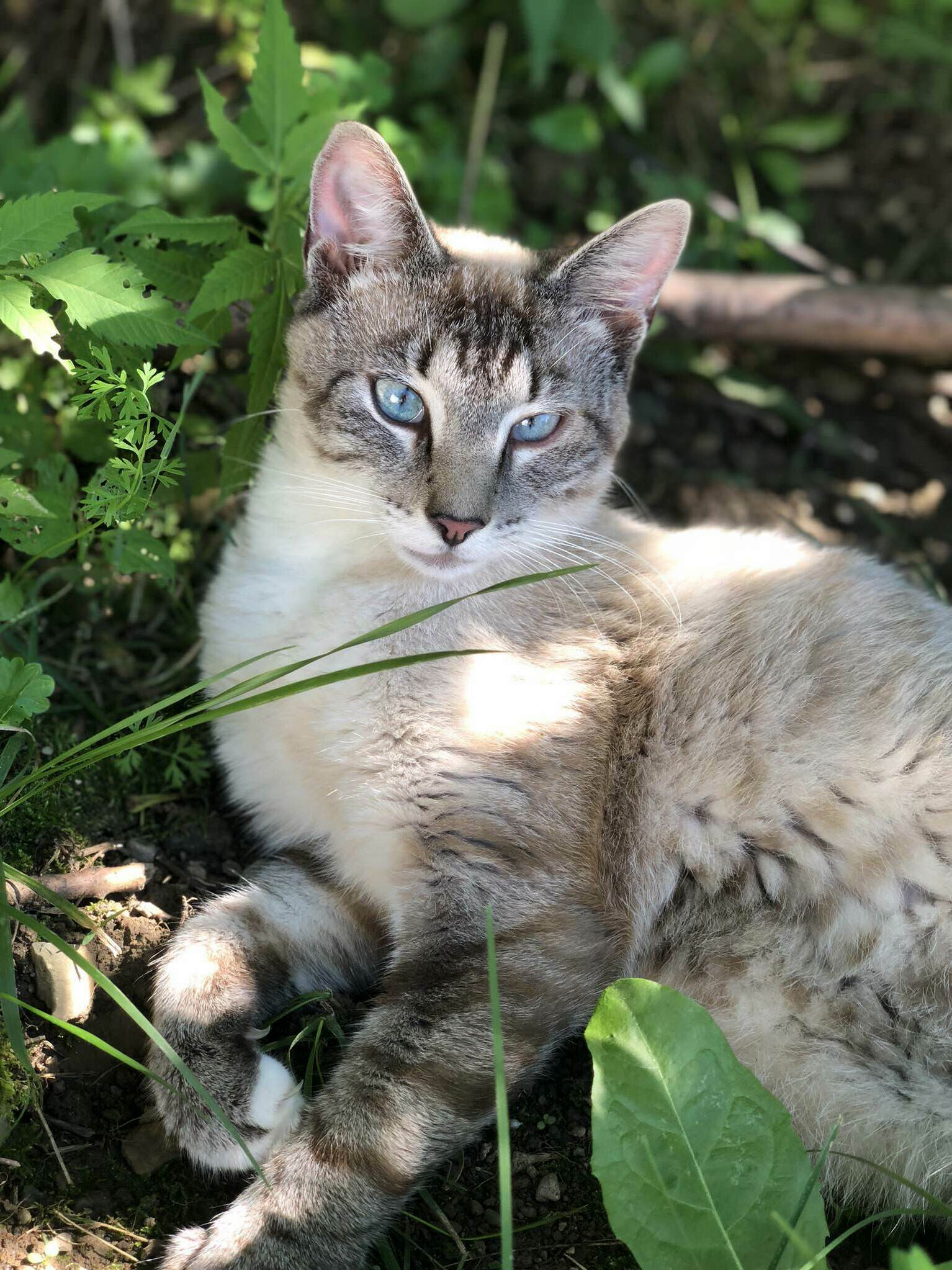 Prettiest stray cat ive ever seen