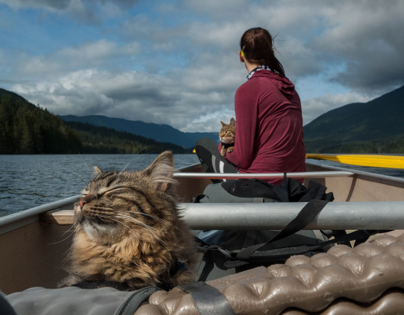 Rescue cats that were adopted by outdoor adventure guides.