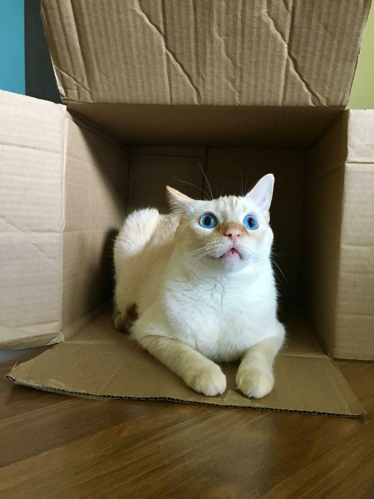 Sushi likes his box.