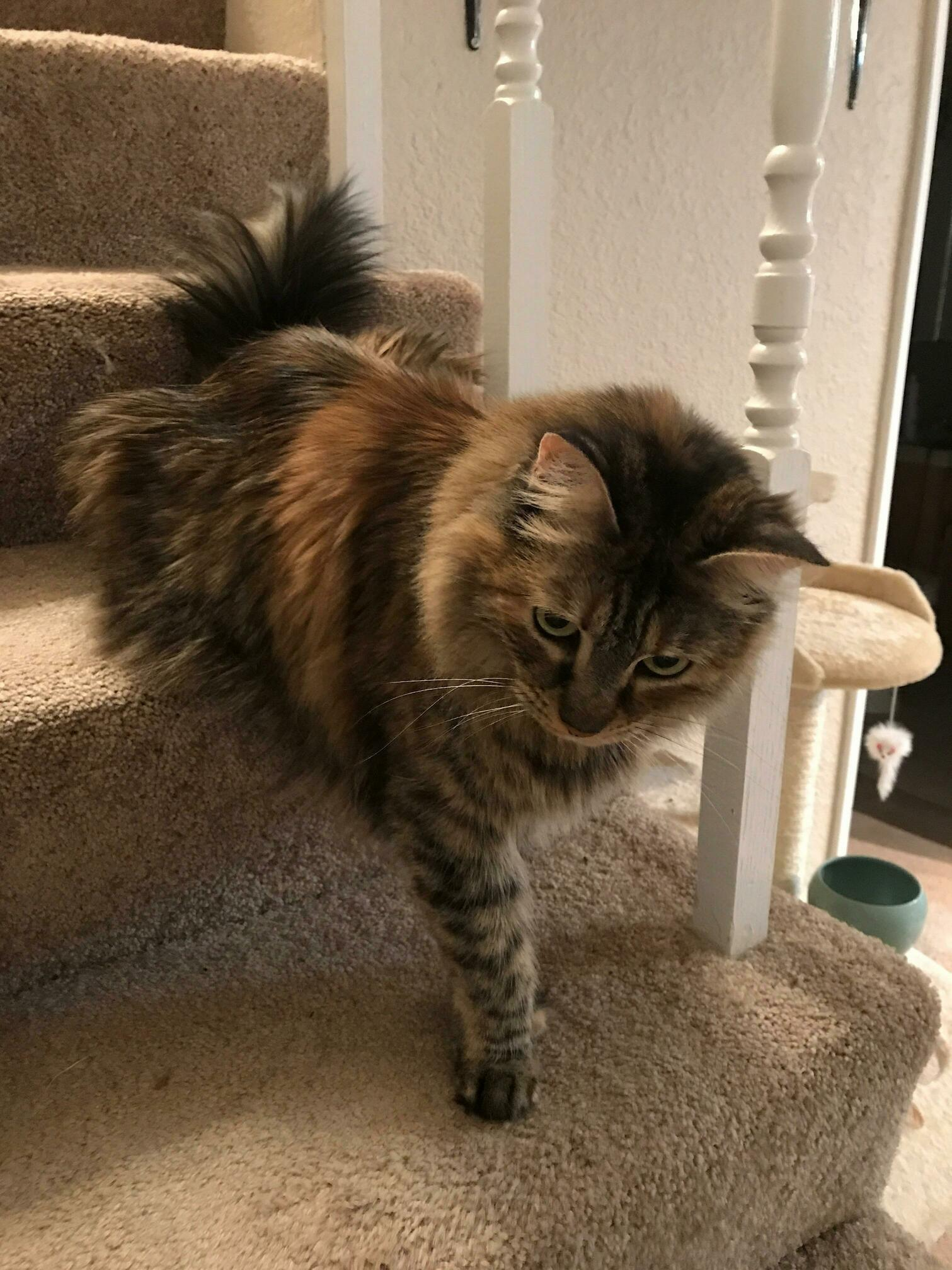 This is how my cat sits on the stairs.