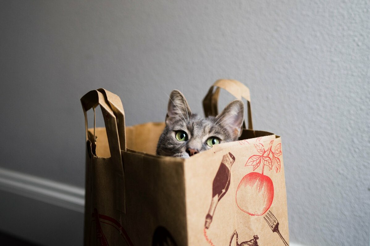 Trader joes now better, with cats.