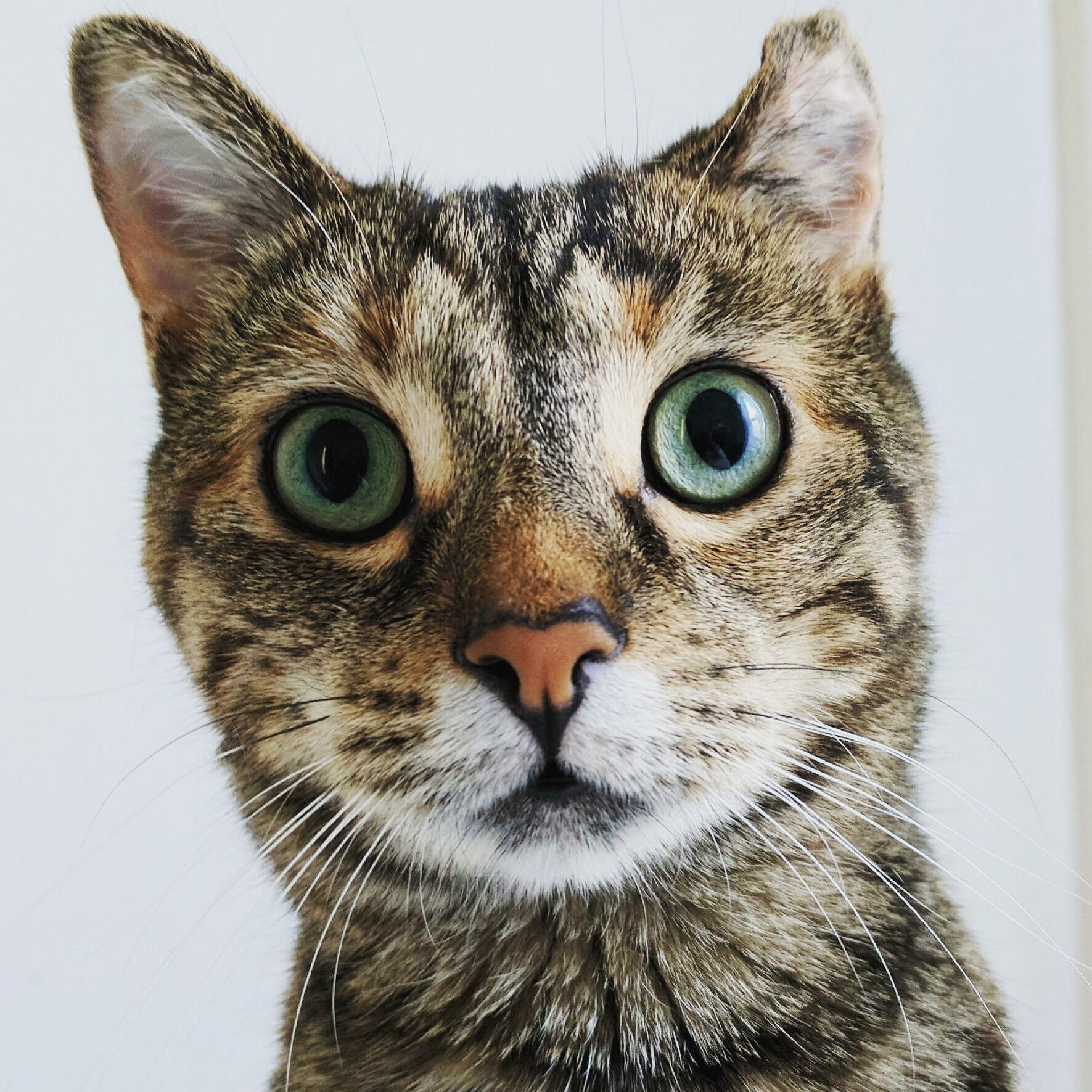 Twiggy t adventurecat and her wonky ear.