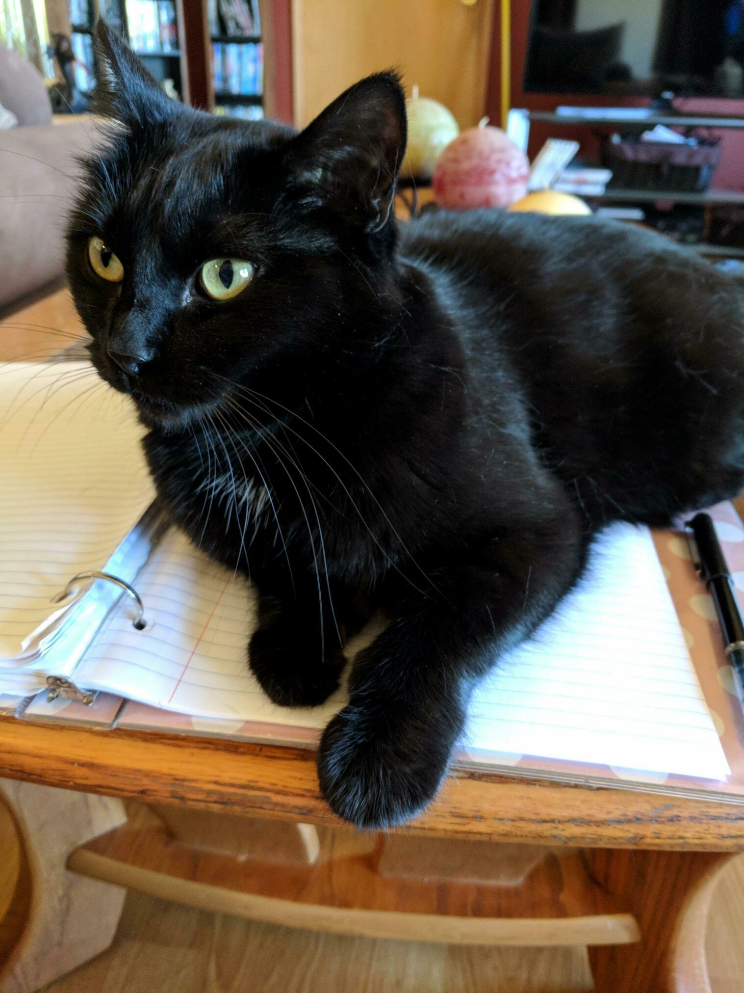 Bandit likes to help me write music