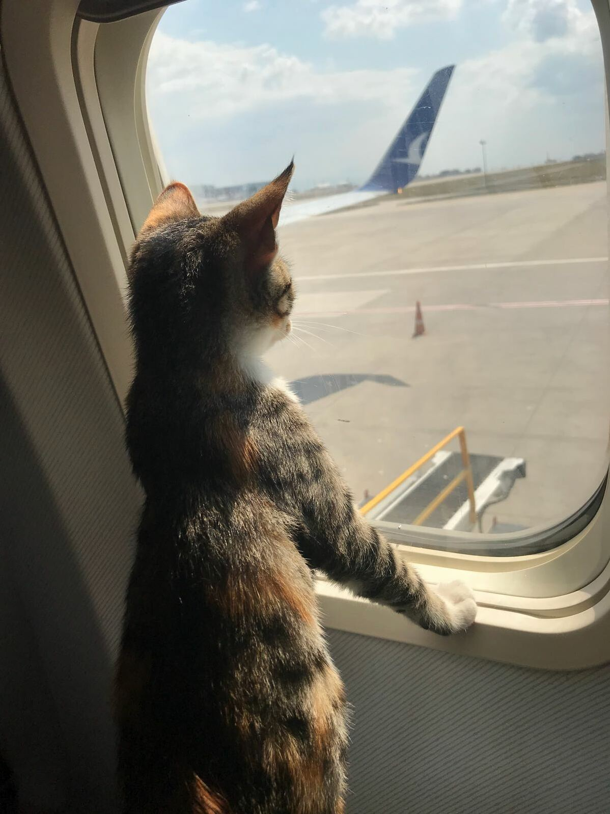 Kitten likes traveling