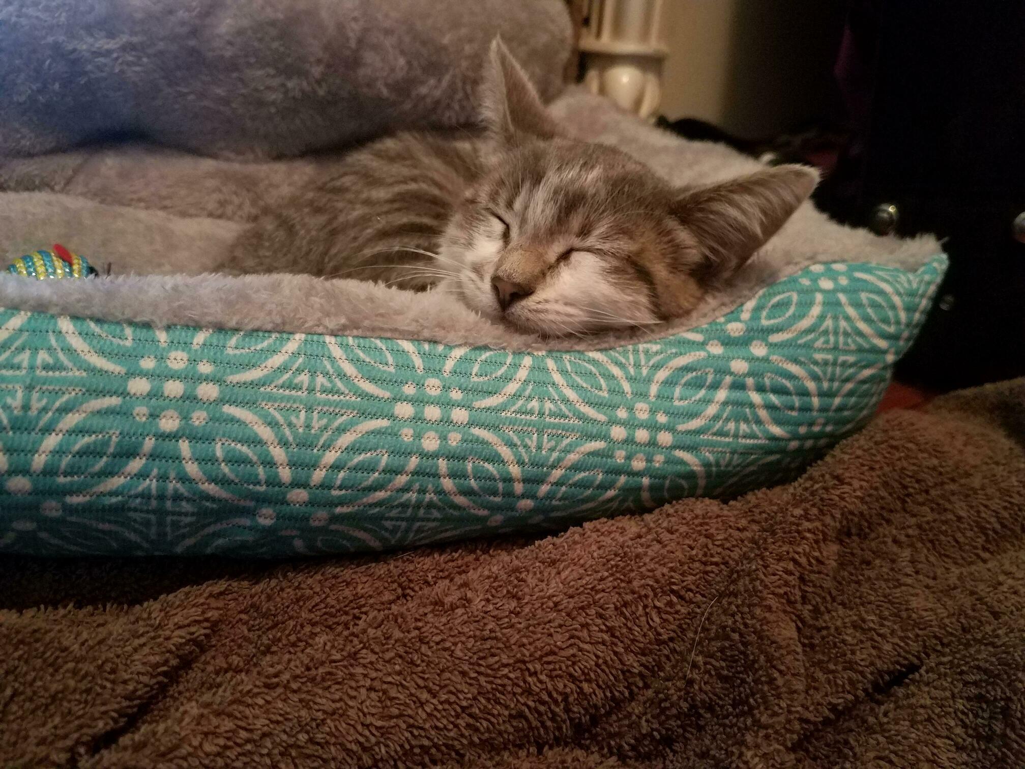 My new kitten, artemis!
