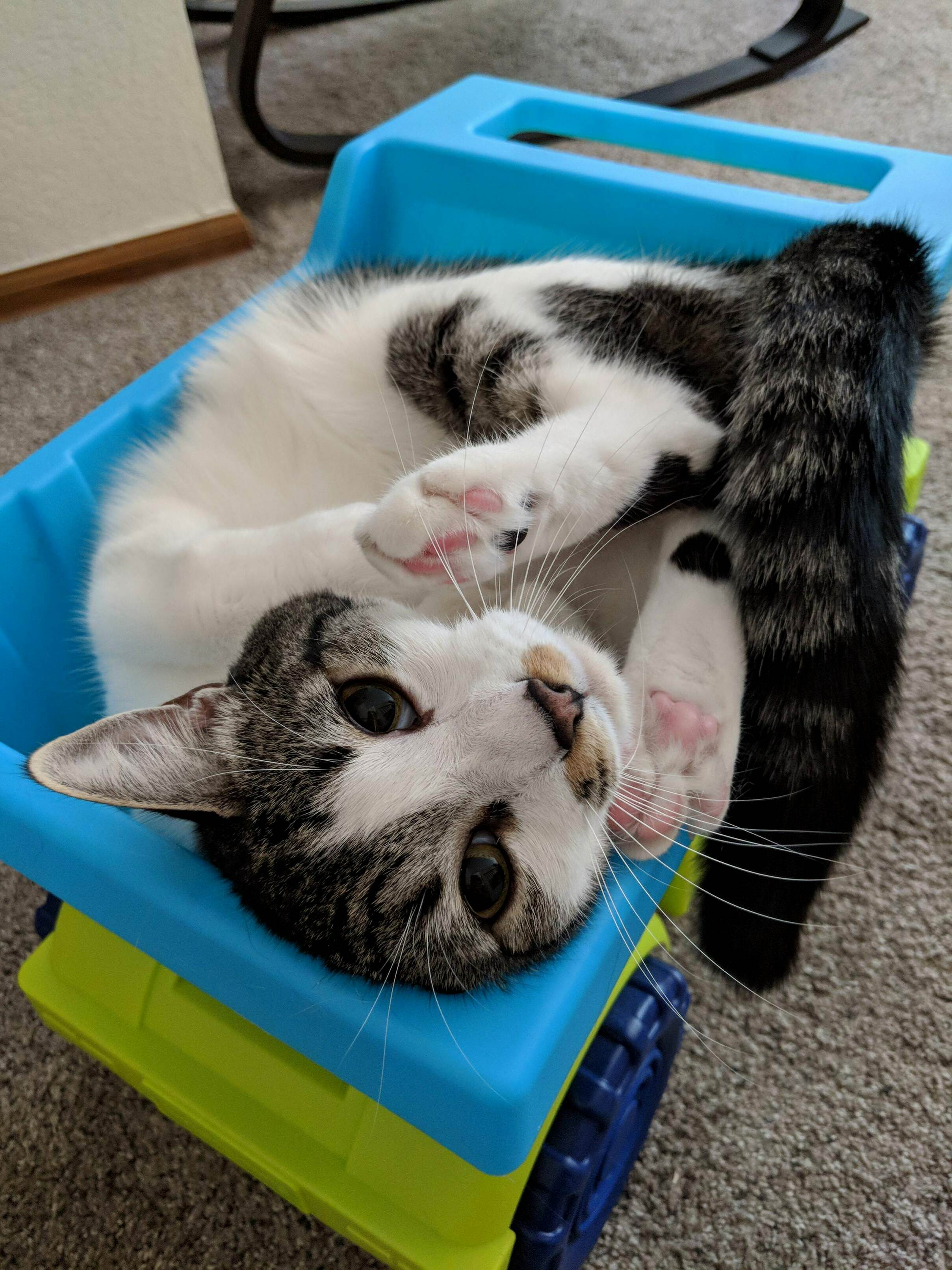 Playful kitty in a toy dump truck
