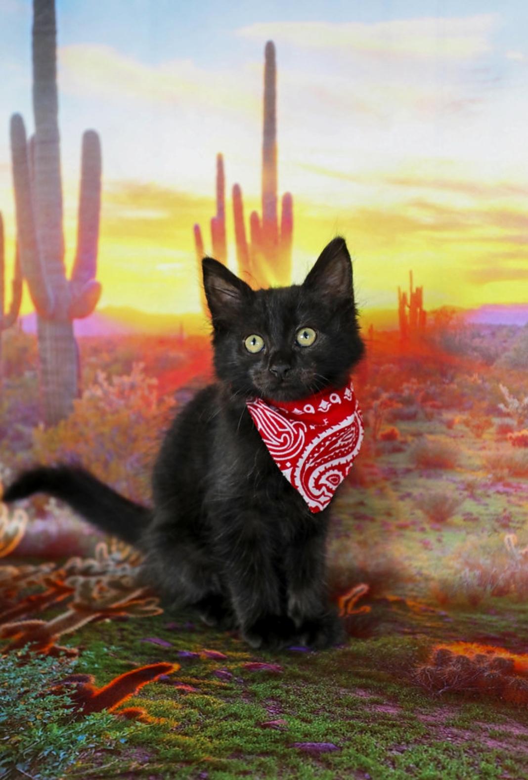 Who says black kitties arent photogenic